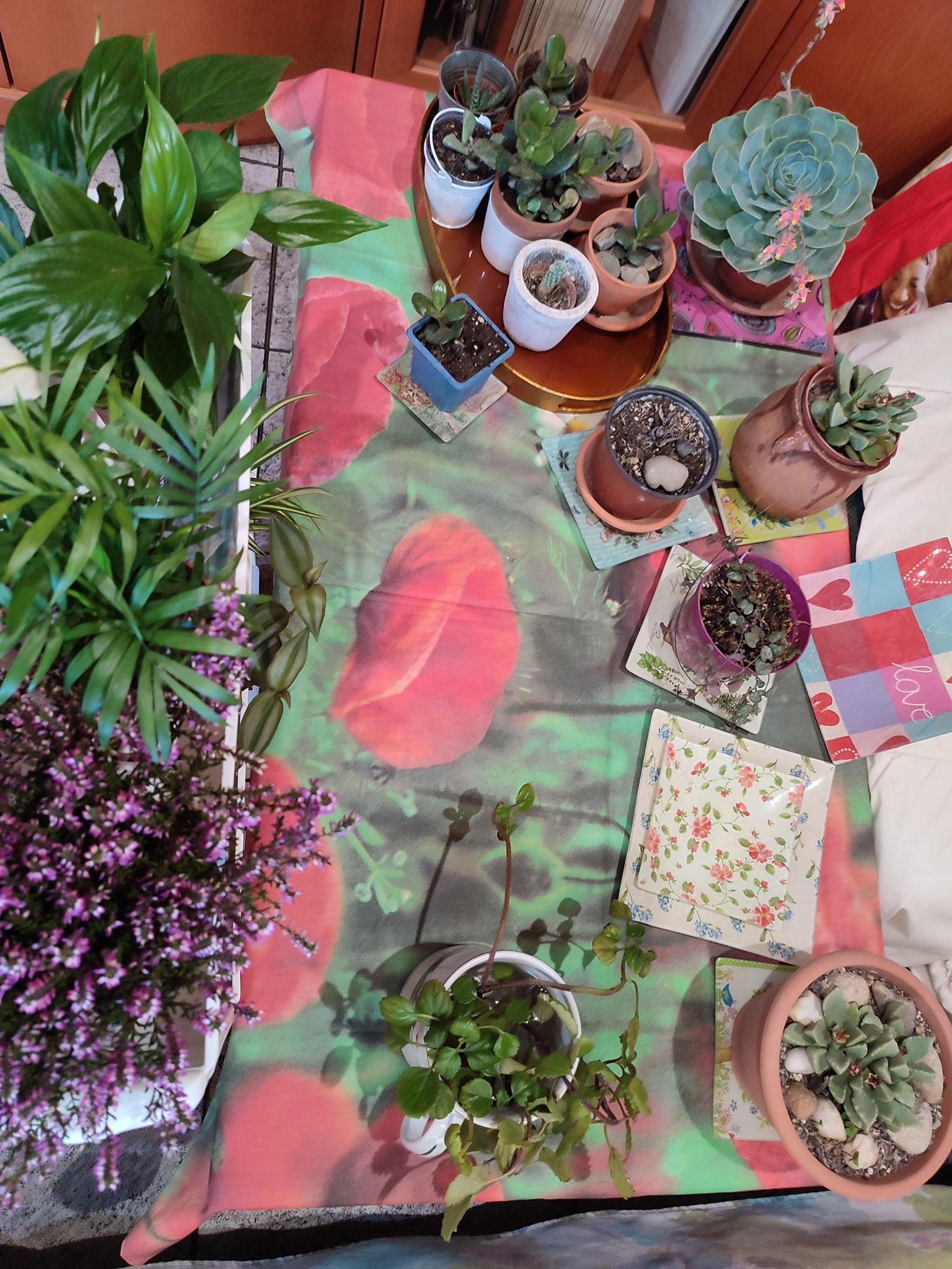 Plantas para elegir