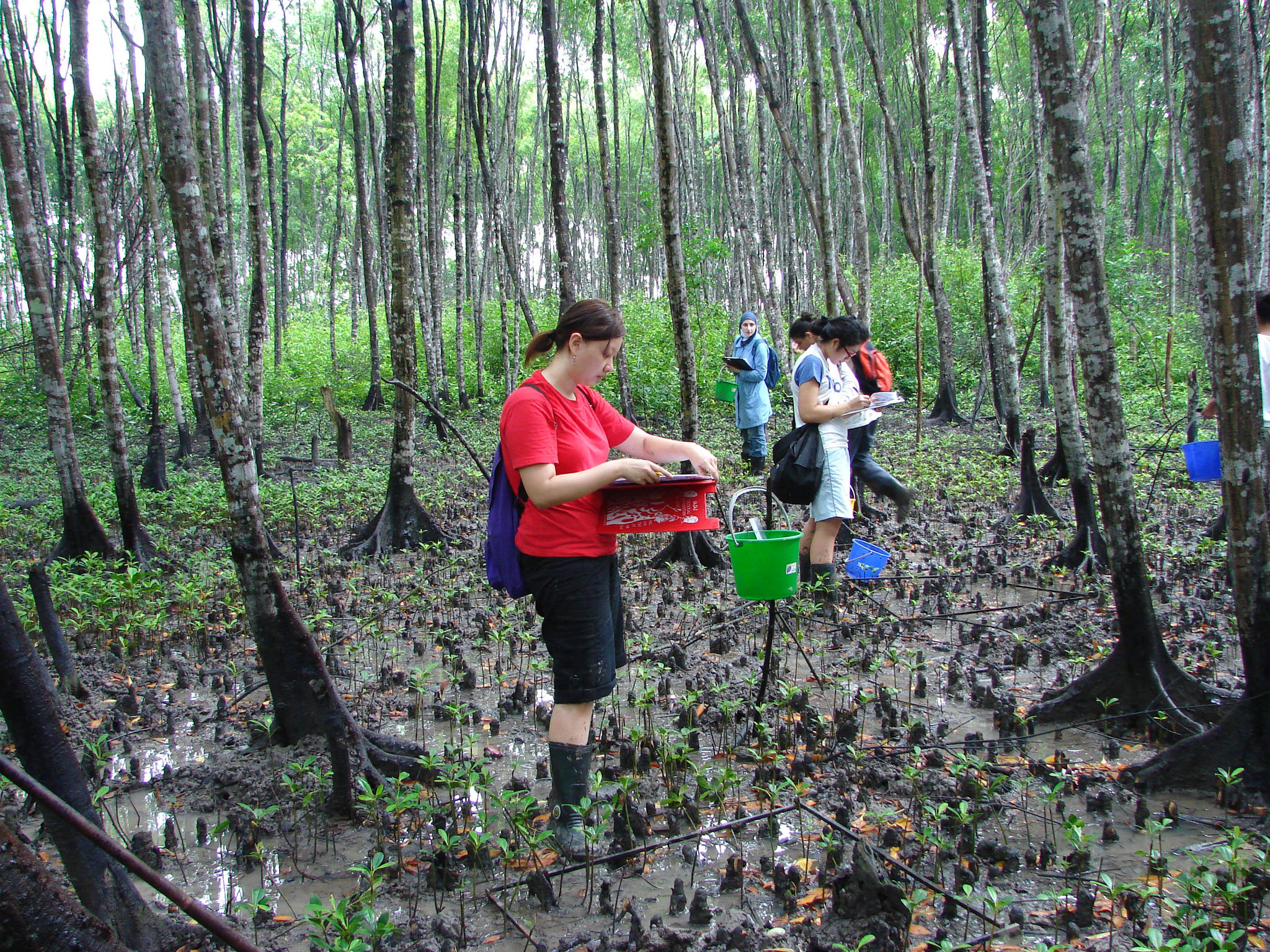 Mangrove sampling's field trip. Photo credit to Dr. Holly.