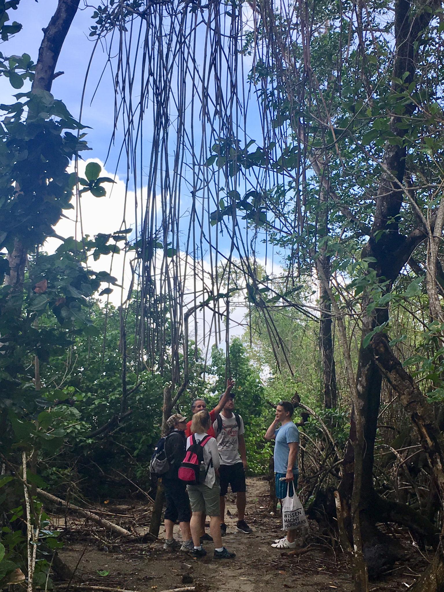 Mangroven-Lagune