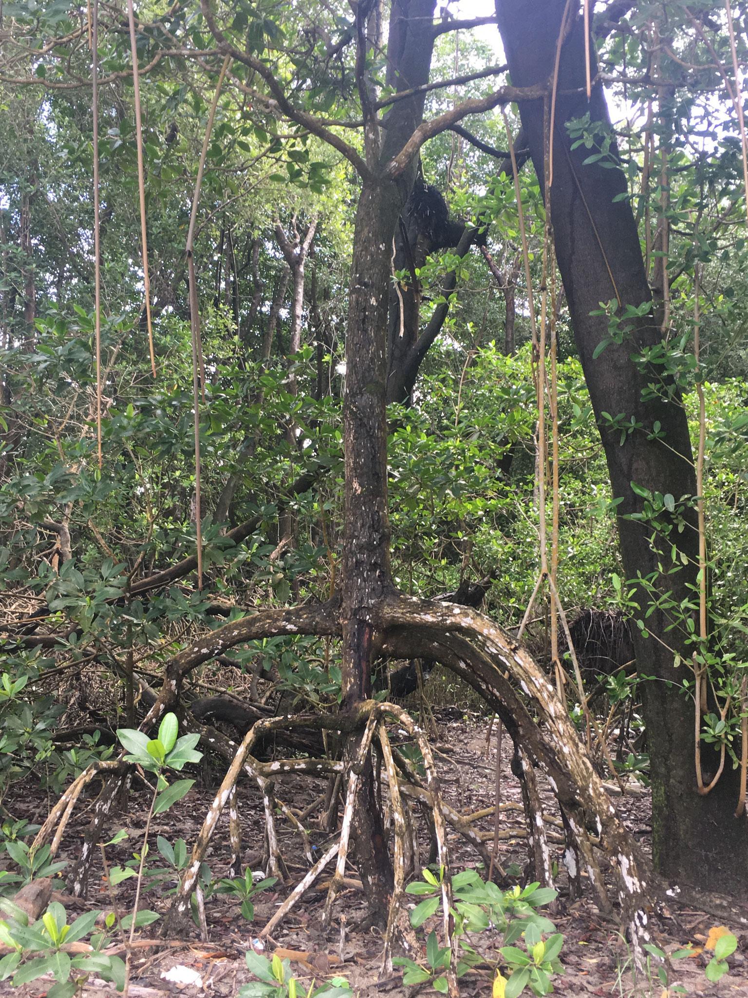 Bäume schlagen Wurzeln an der Oberfläche - mystisch...