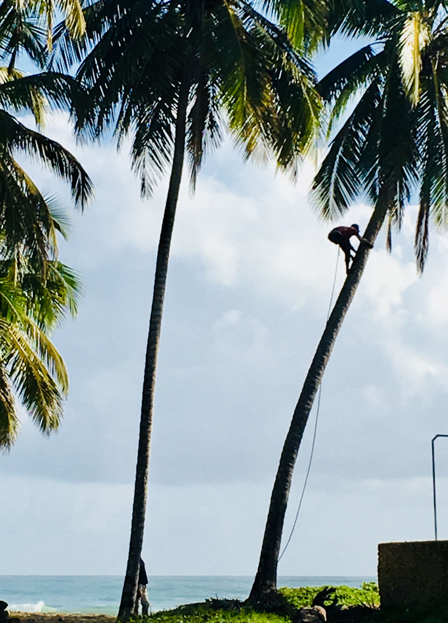 ..mit Blick auf die alltäglichen Arbeiten der Einwohner - hier Kokosnuss-Ernte