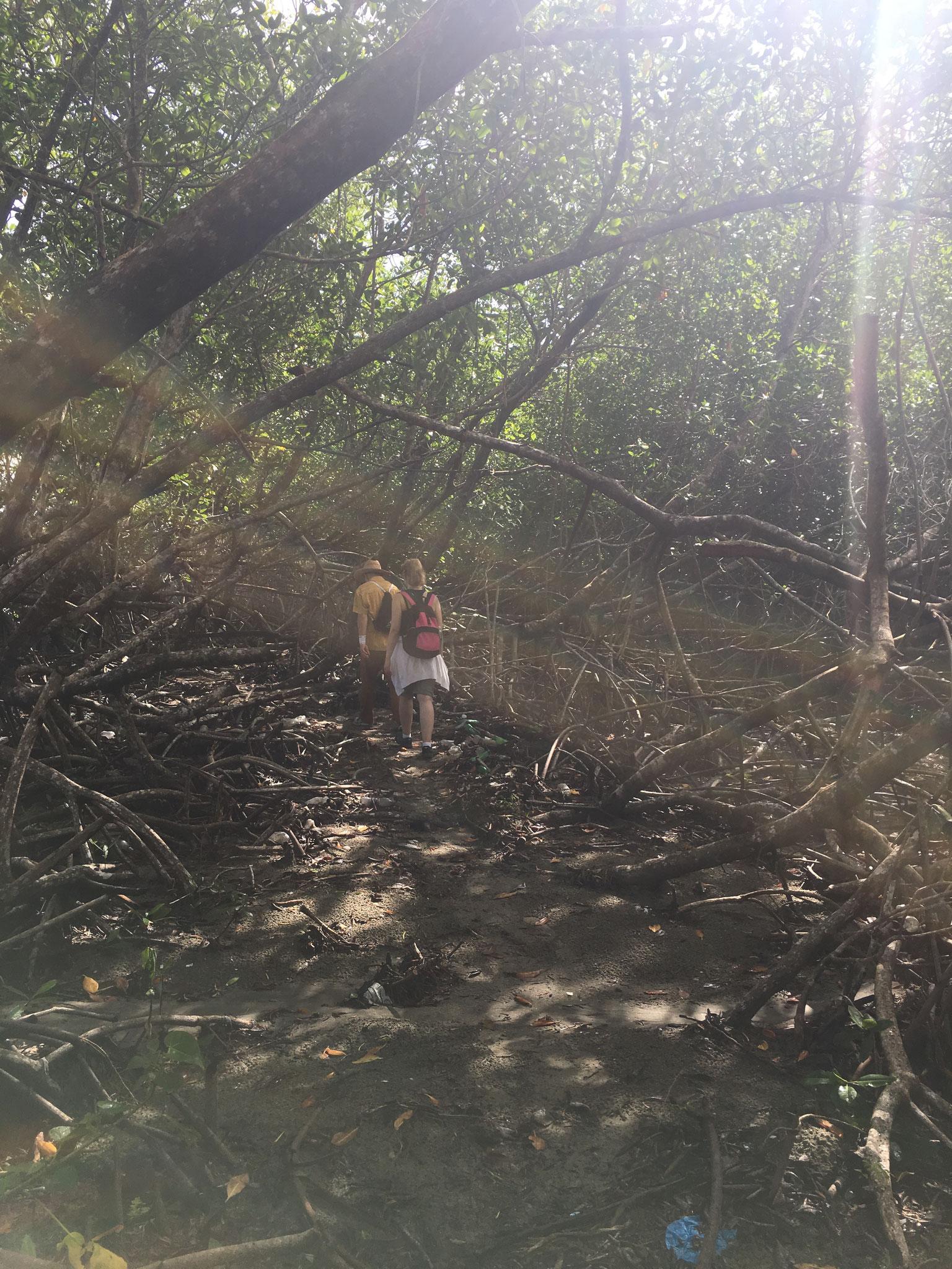 ..weiter geht´s in die Mangroven-Lagune