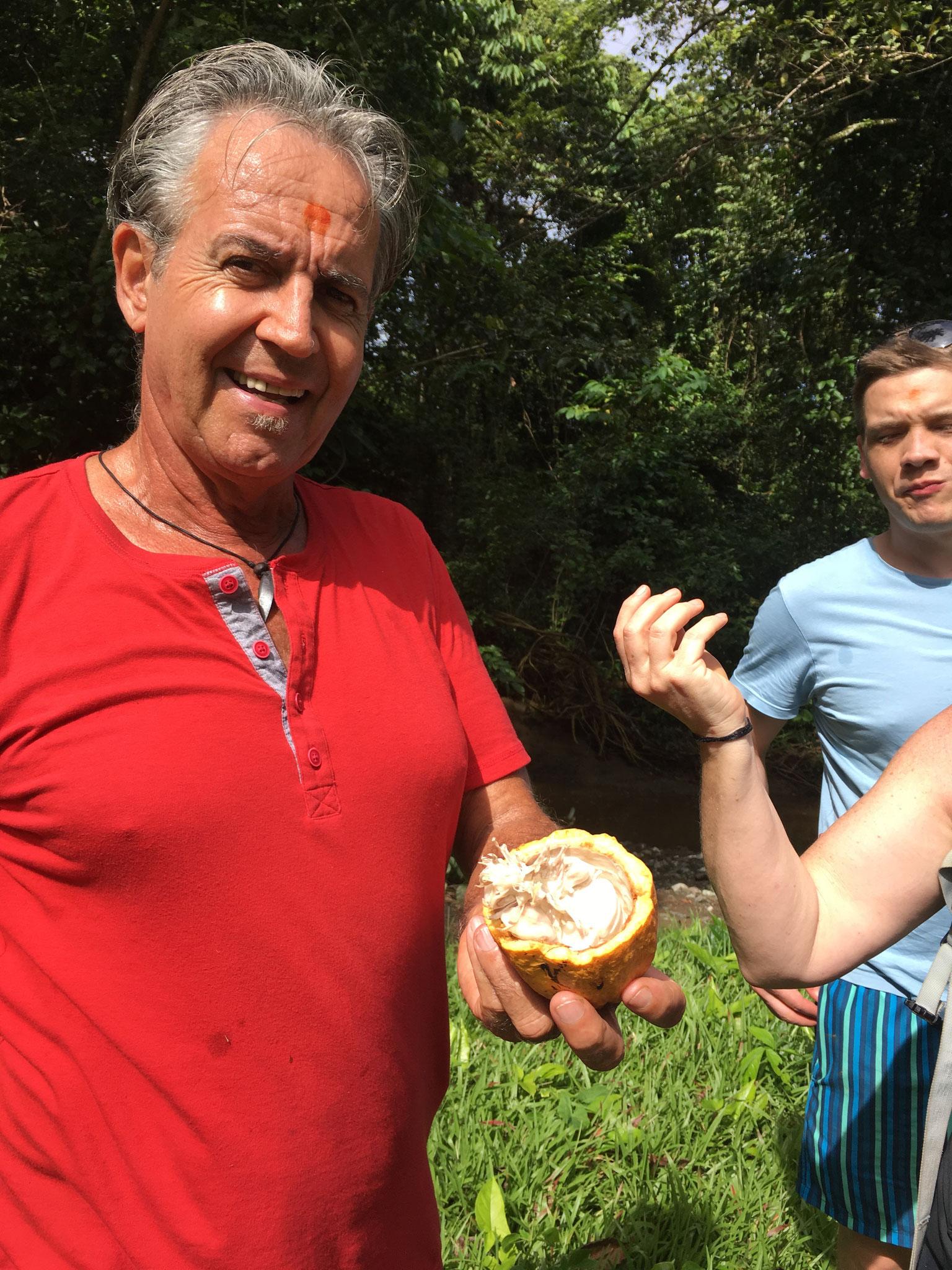 Kakao-Frucht mit innenliegenden Kakao-Samen