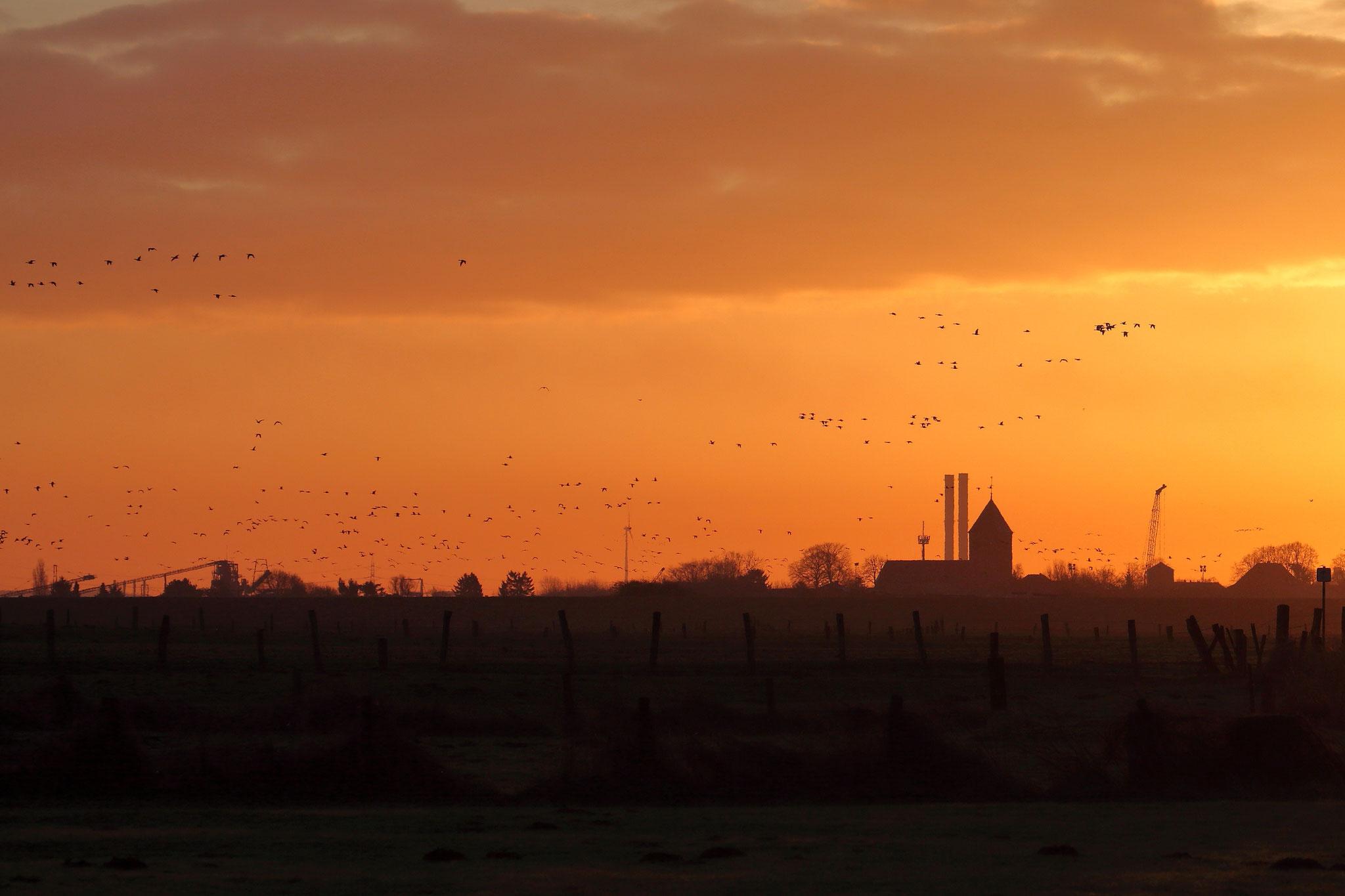 Wildgänse bei Sonnenaufgang
