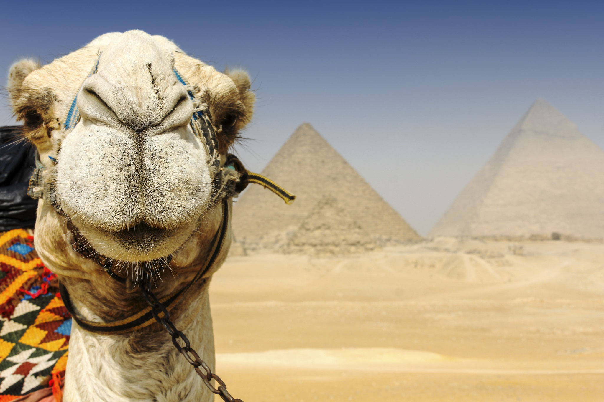 Cairo - Egypt © 2014 Nik Schwald.