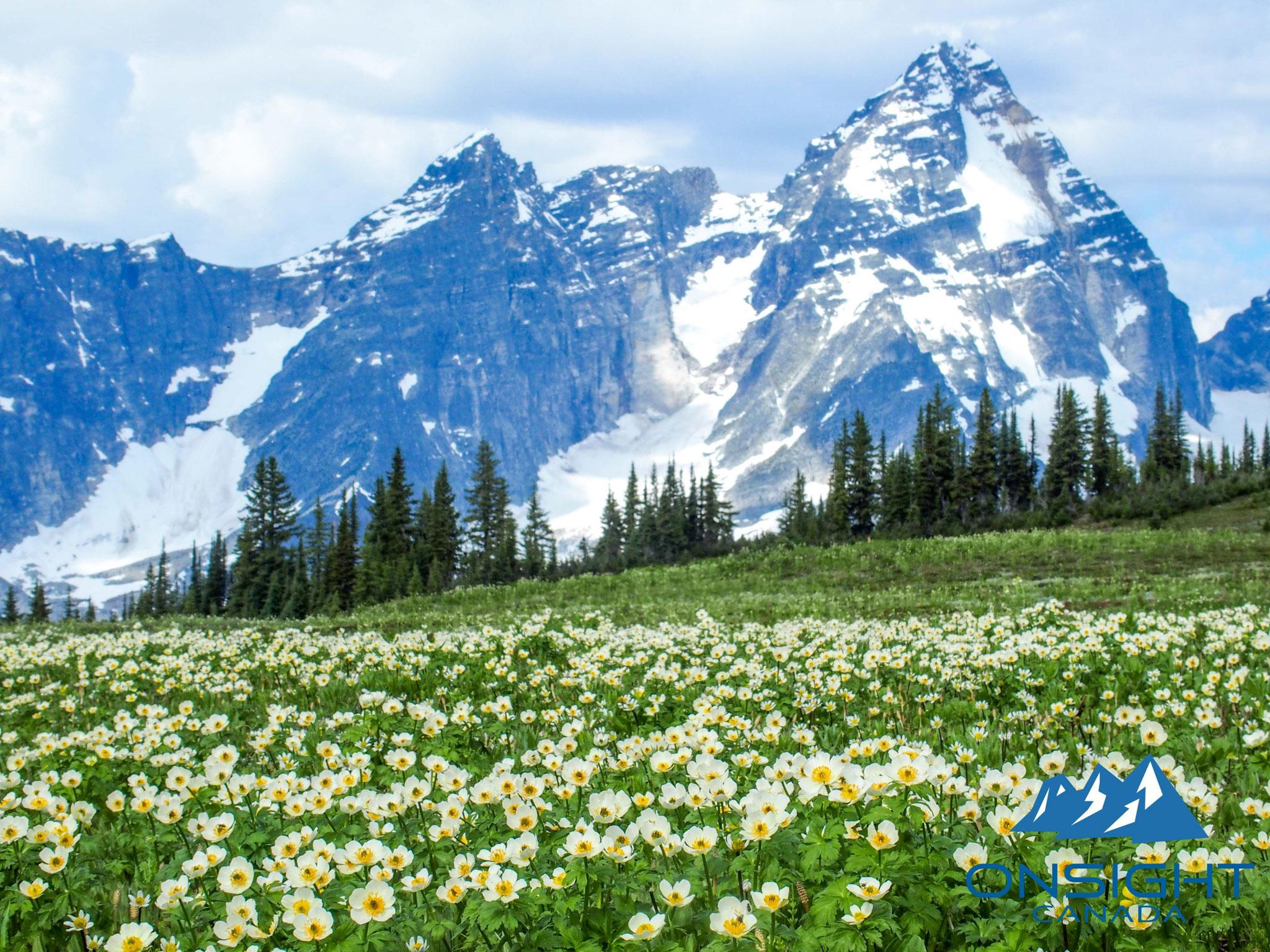 お花は7月-8月中旬まで楽しめる