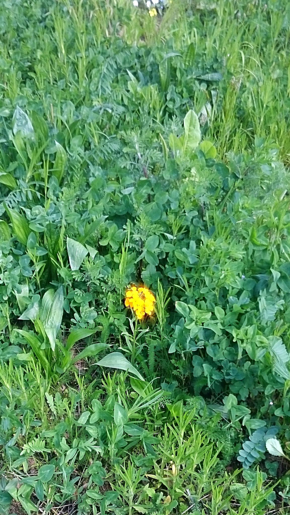 die ersten Blüten zeigen sich! - Foto: Britta Raabe