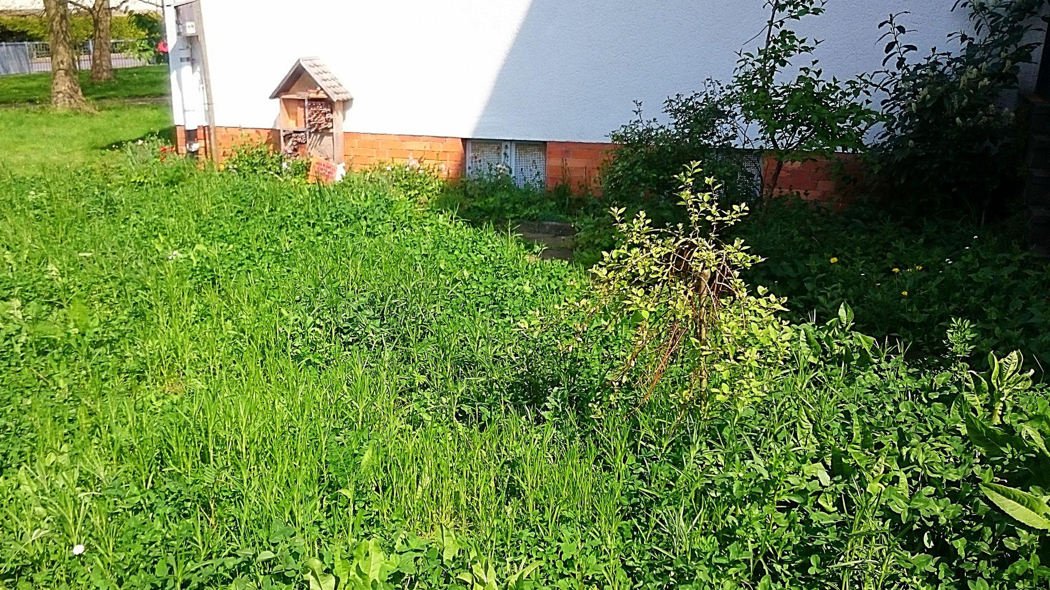 es grünt so grün: der Garten links vom Eingang- Foto: Britta Raabe