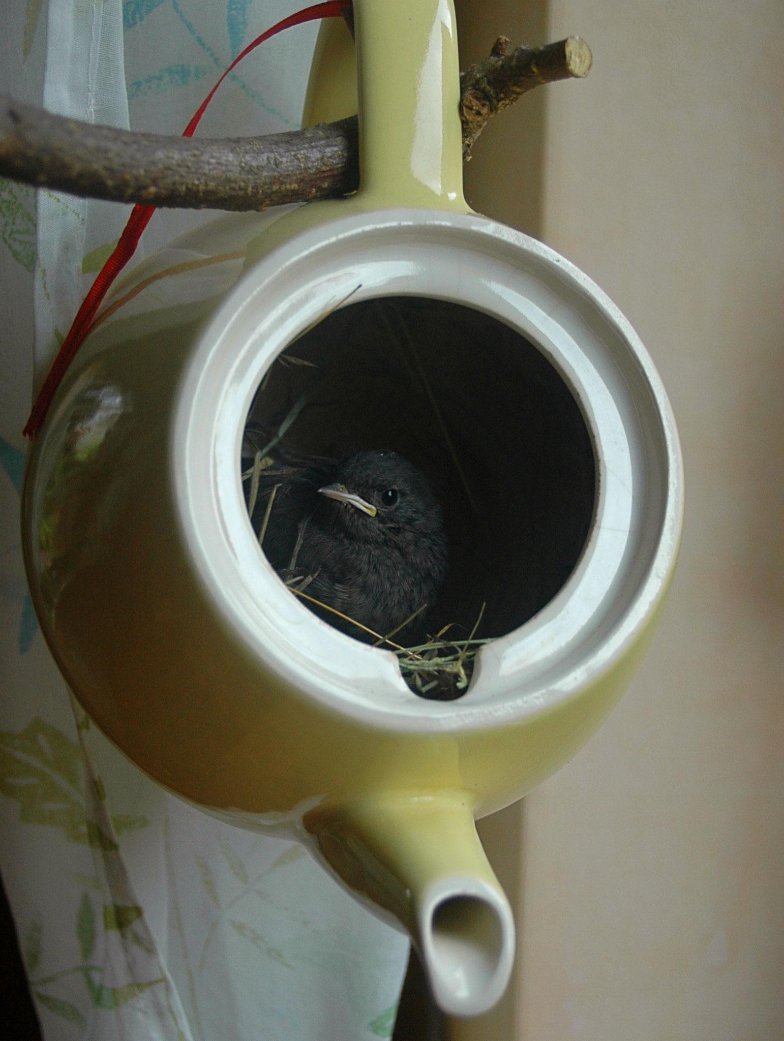zwei Tage, bevor er wieder zu seiner Familie kam, wollte er unbedingt aus dem Fenster schauen - dieser ungewöhnliche Vogelkäfig tat da beste Dienste - Foto: Britta Raabe