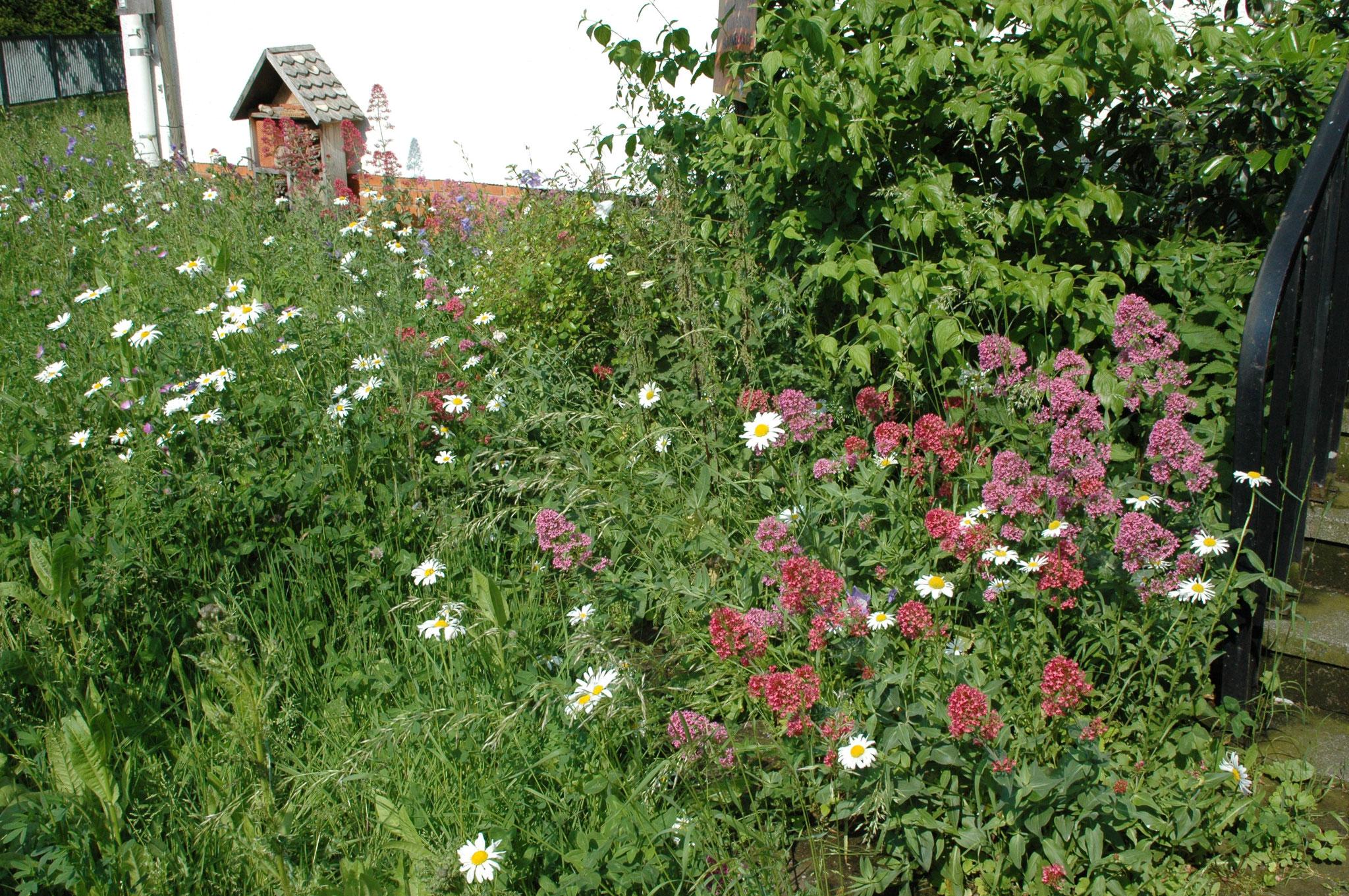 Juni 2019: der Garten am NUZ-Eingang - Foto: Britta Raabe