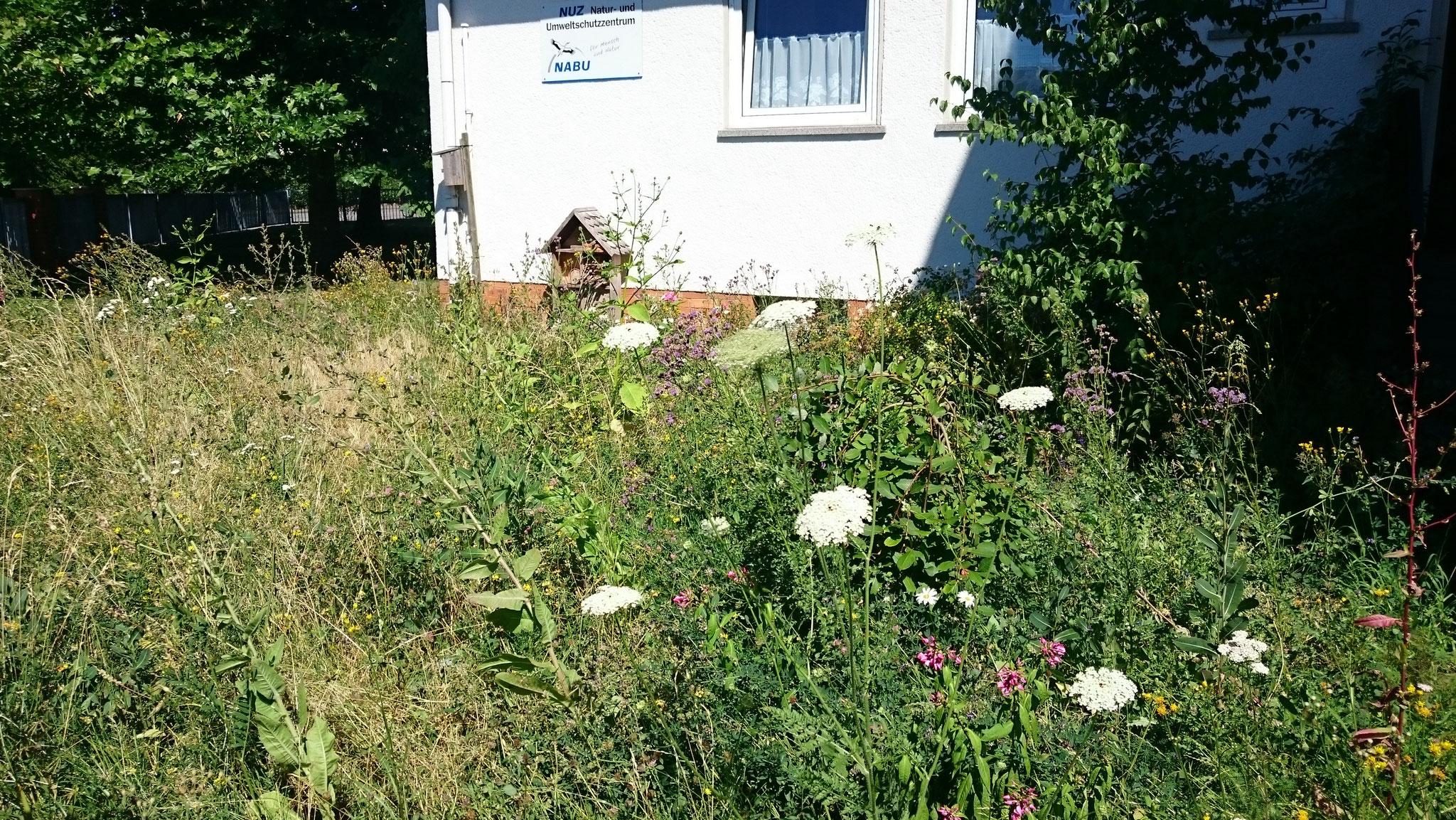 ...der Sommerflor blüht (Juli) - Foto: Britta Raabe