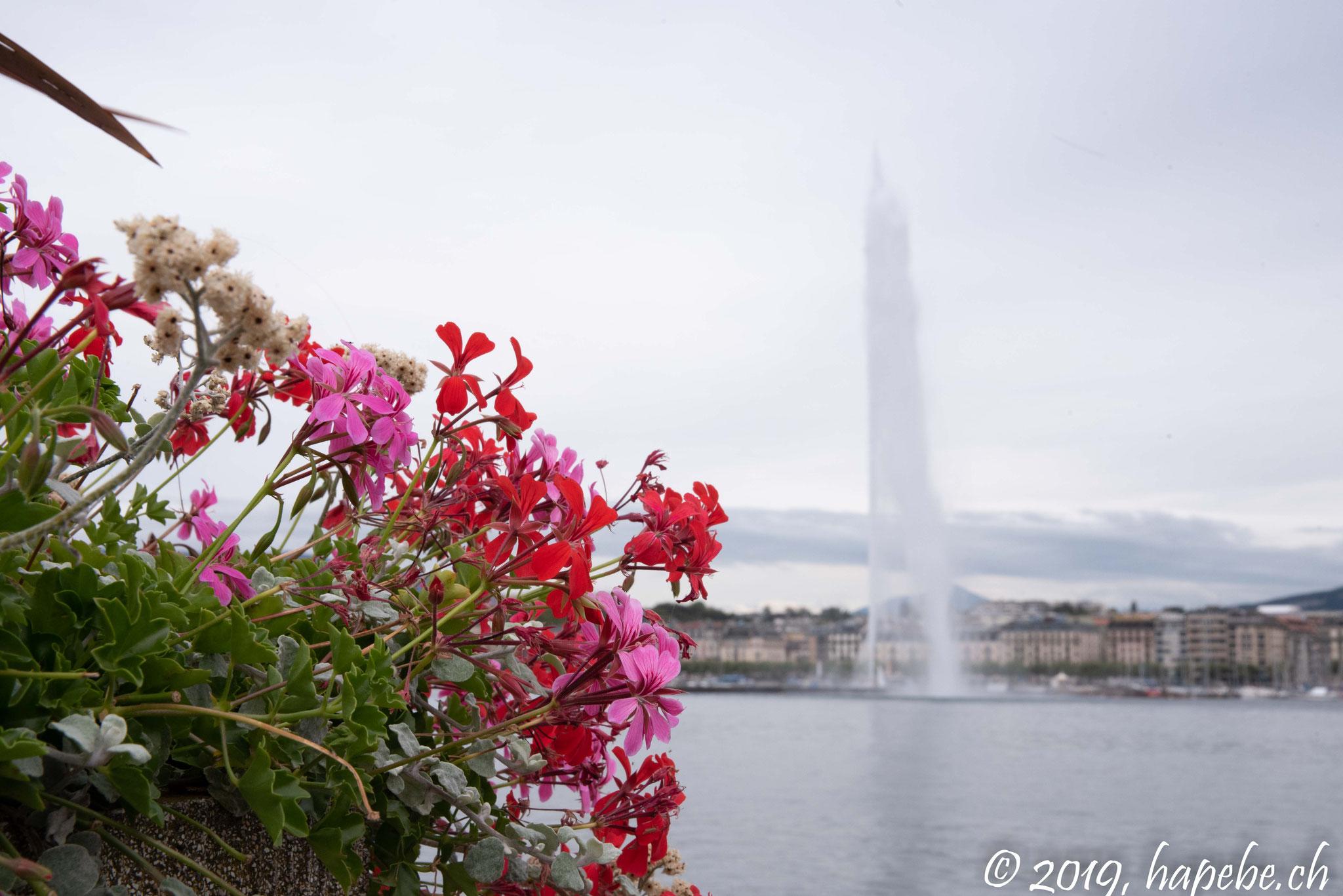 Genf (Genève)