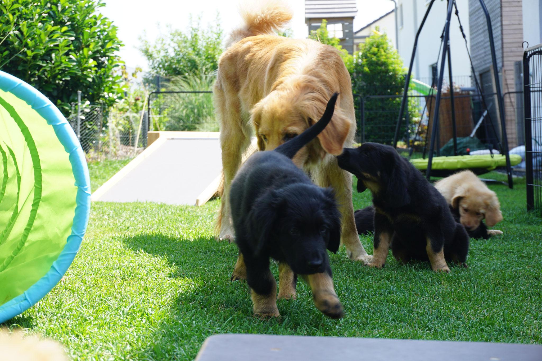 Luna mit ihren Kindern