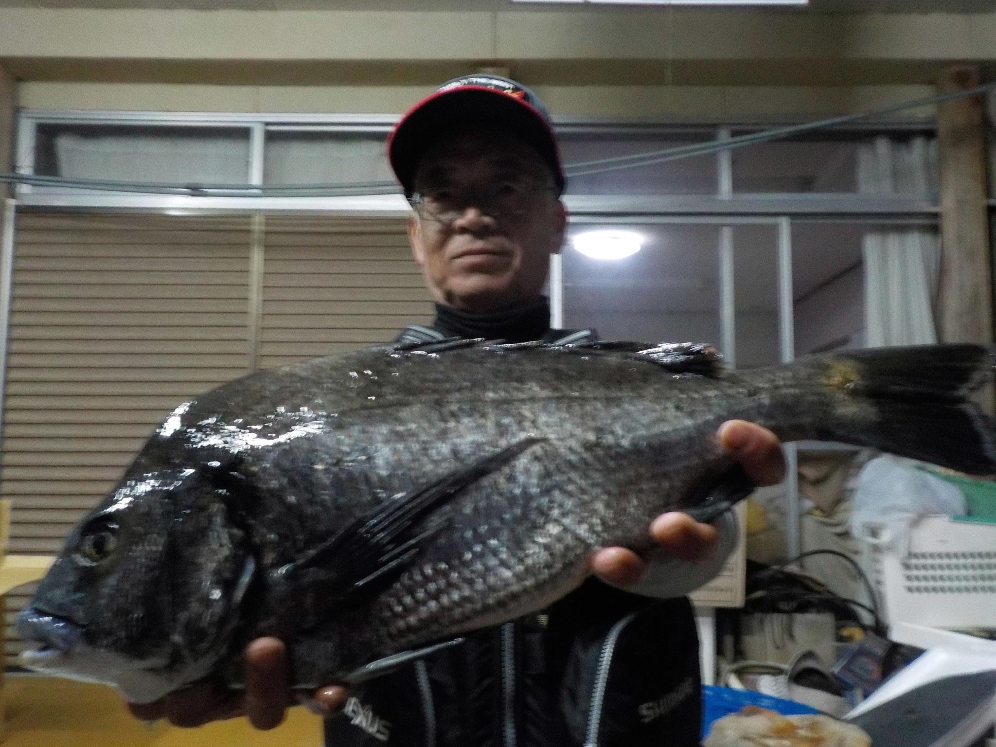 3月17日 磯釣りで野口さん ガバチヌ51.1㎝
