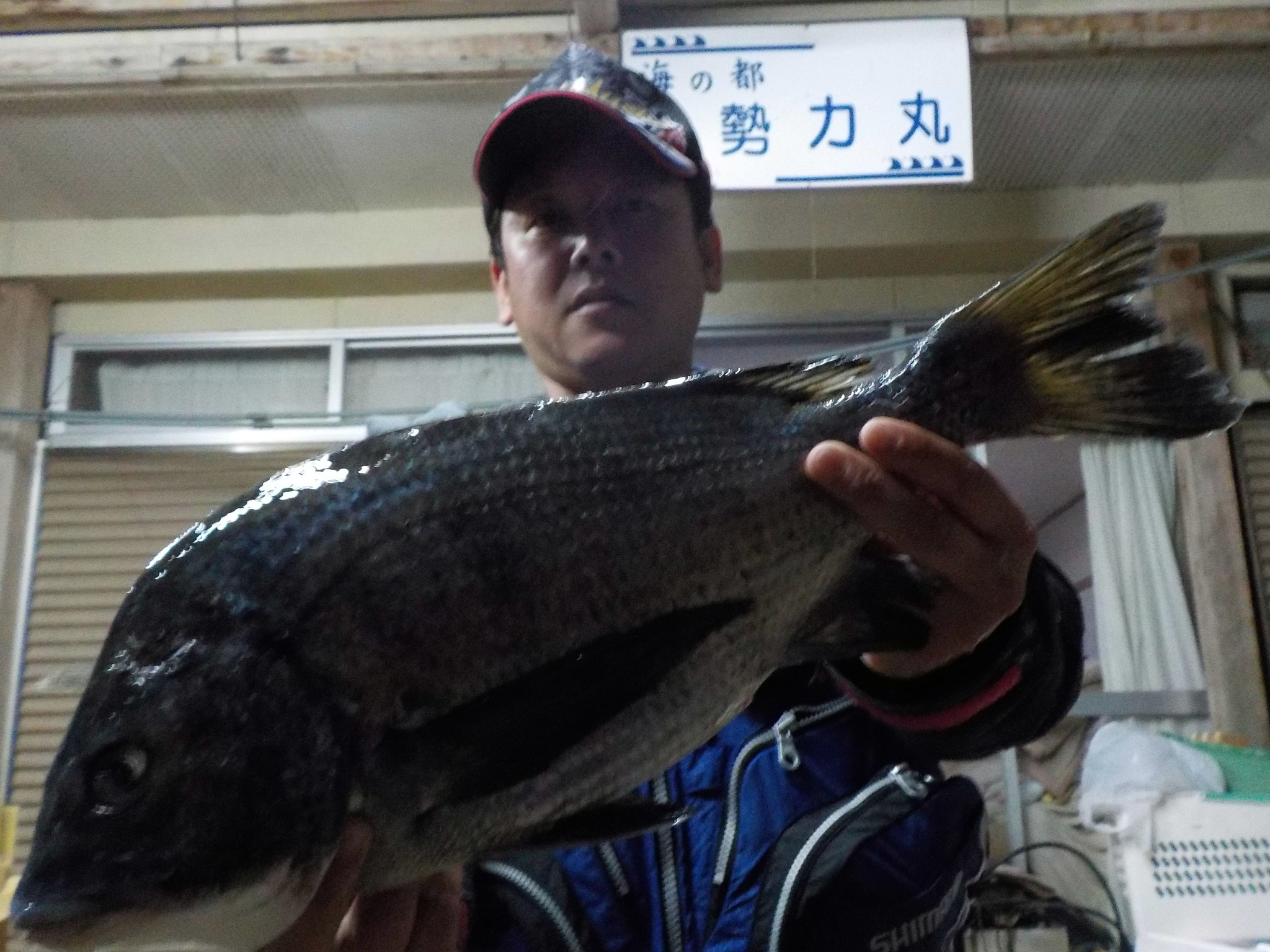 3月17日 磯釣りで白石さん ガバチヌ50.8㎝