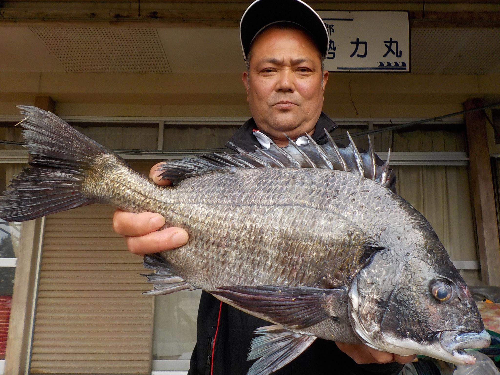 4月13日 磯釣りで吉村 誠一さん ガバチヌ50.3㎝