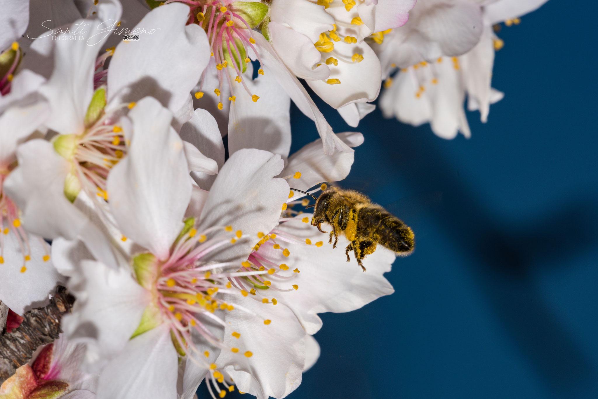 La primera mel de la temporada (febrer 2020)