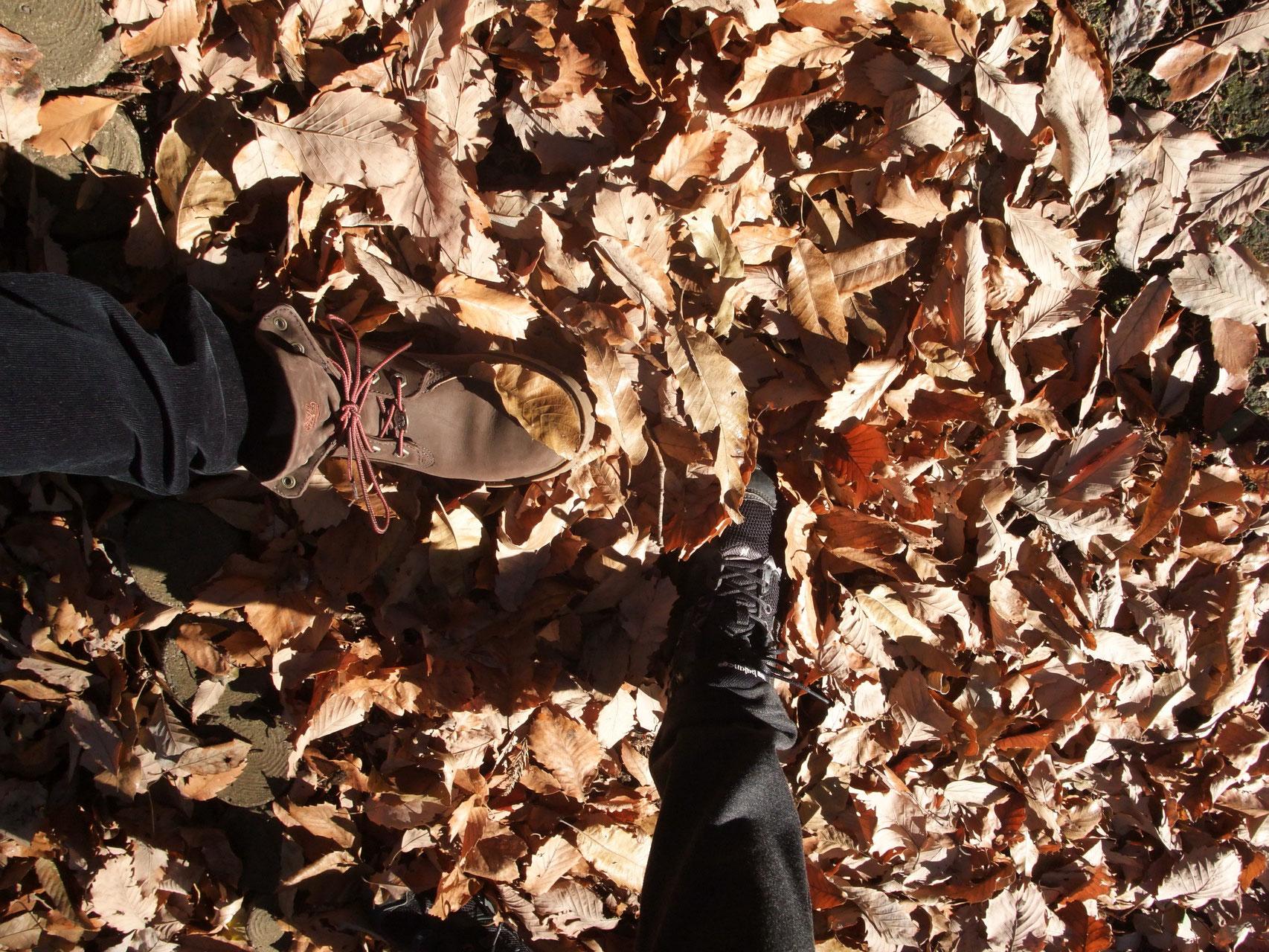 落葉を踏んで