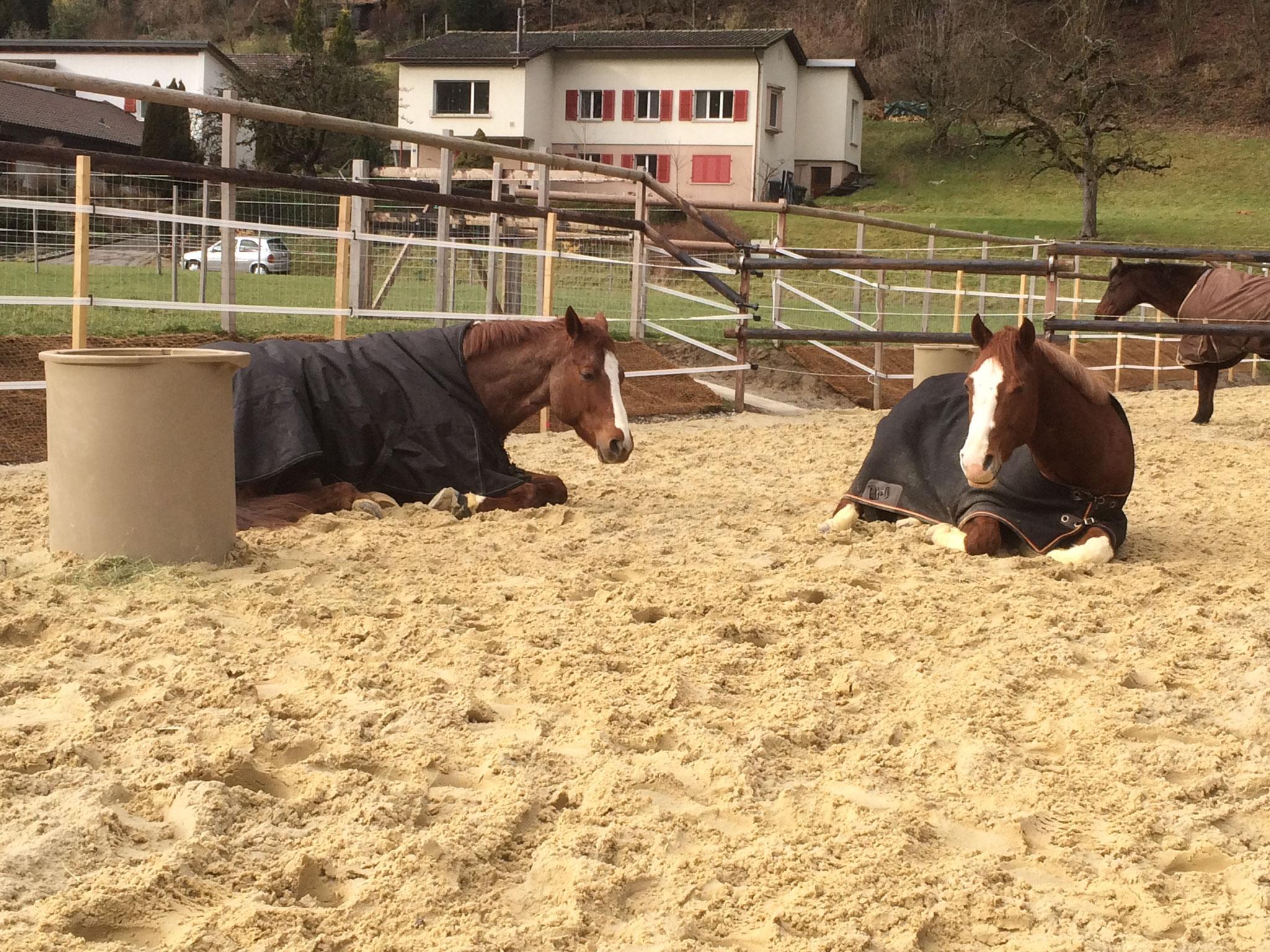 Nebst direktem Sandauslauf fühlen sich unsere Pferde auch täglich während mehreren Stunden auf dem zusätzlichen Sandplatz wohl