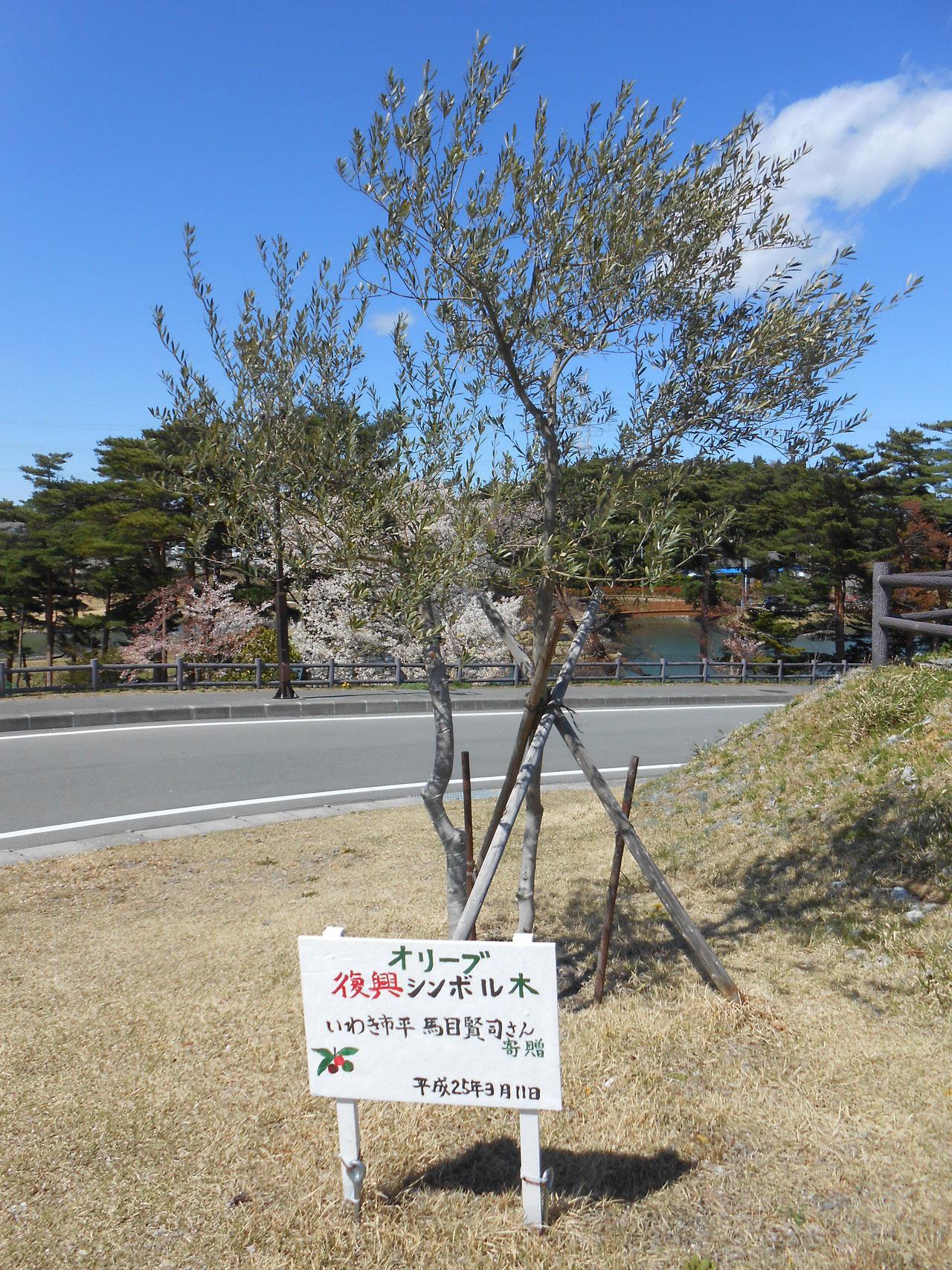 平成28年4月15日 後ろに桜が見えます。