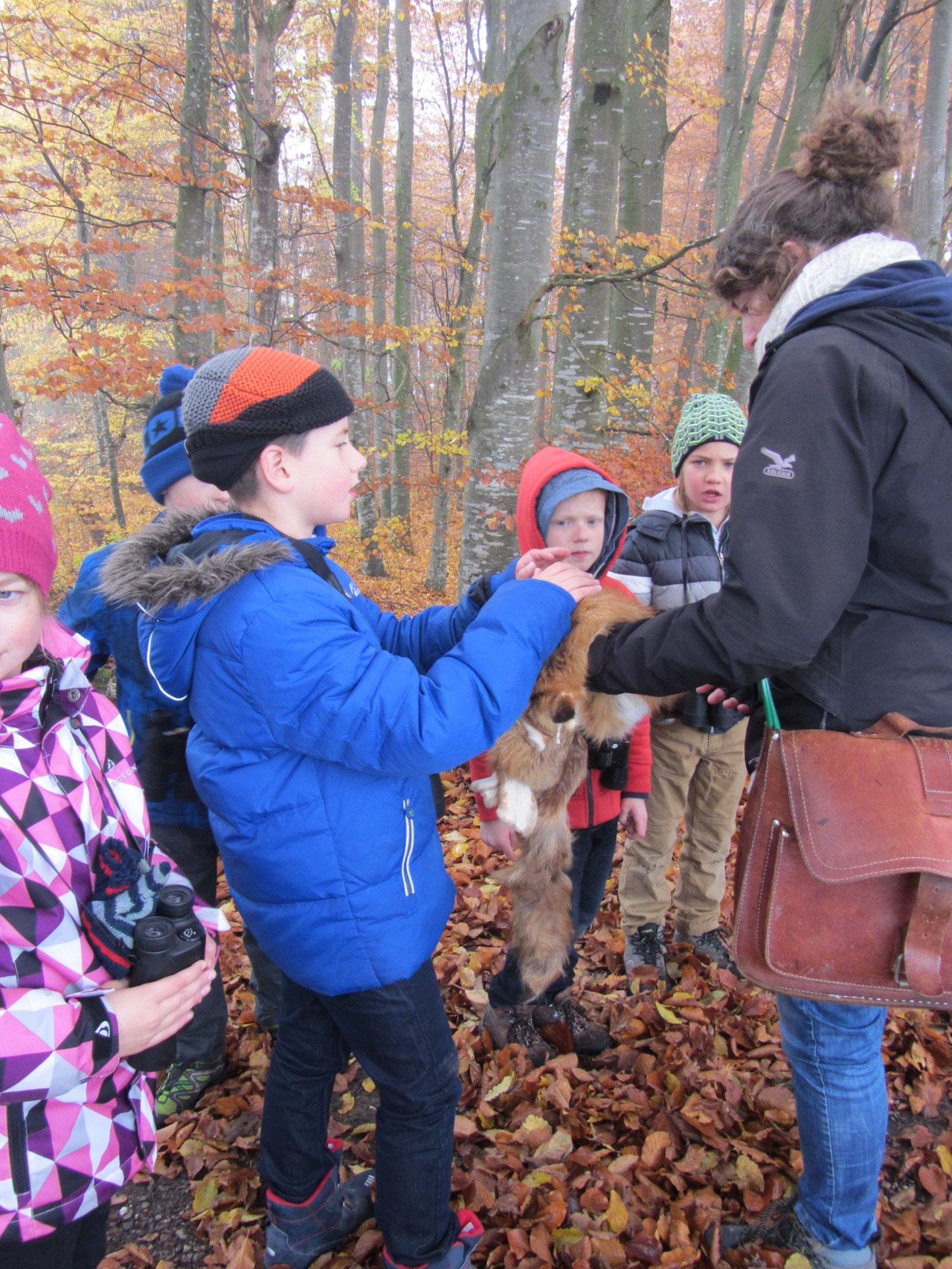 Naturlehrgebiet Ettiswil 1.-3. Klasse - schule-alberswils ...