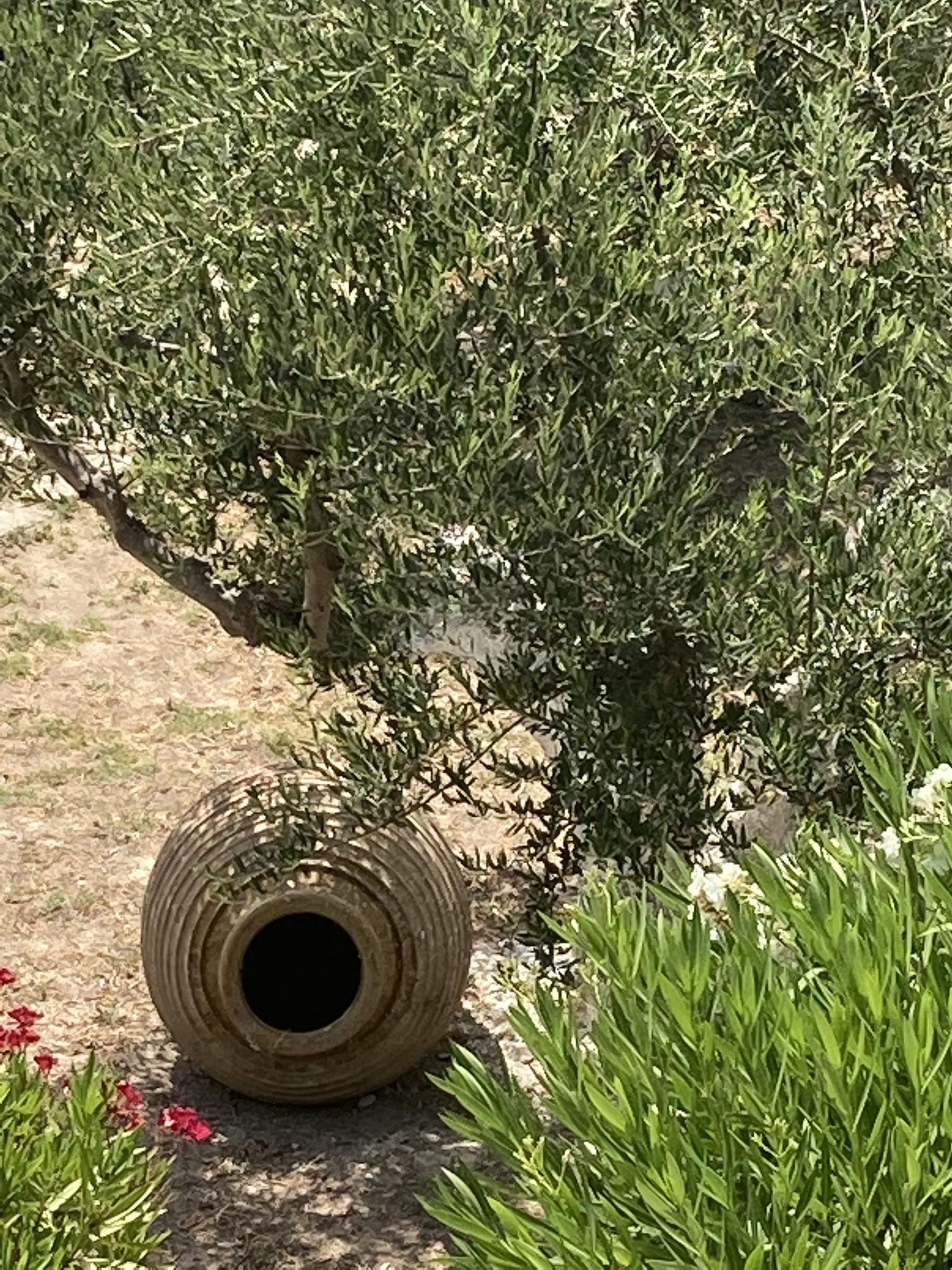 Garten mit Olivenbaum und Pittakrug