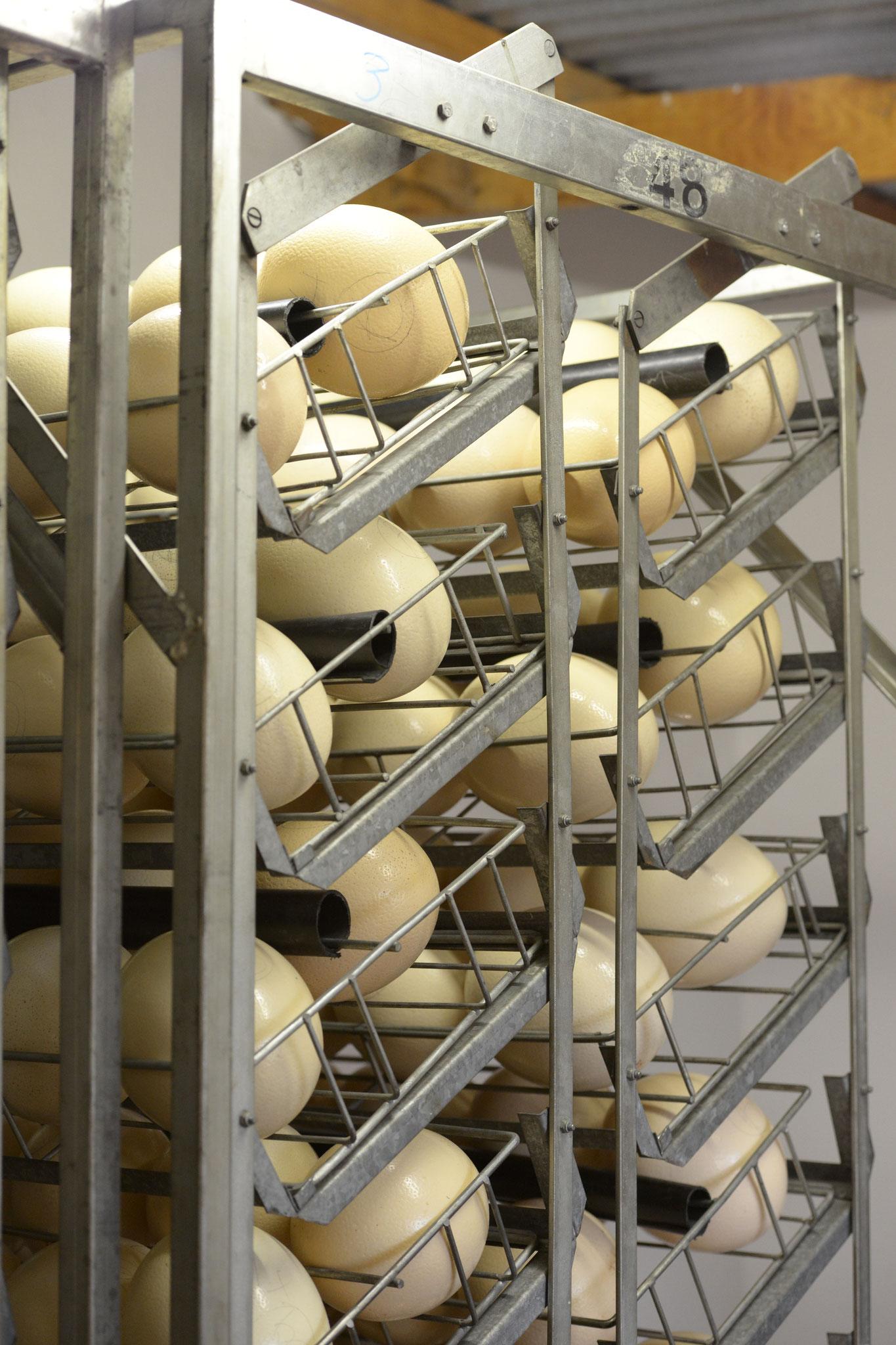 In riesigen temperierten Hallen werden die Strausseneier gebrütet