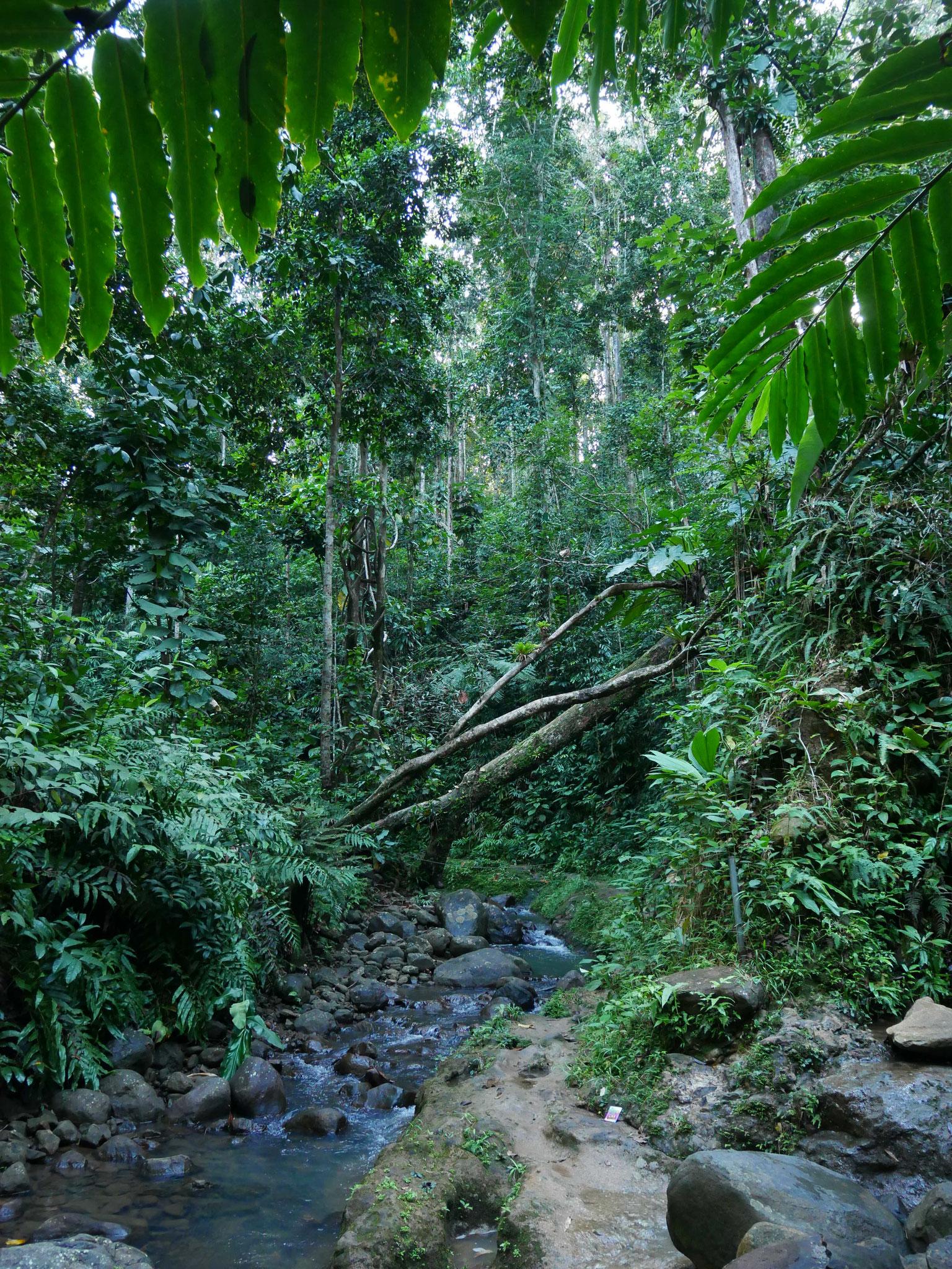 Première marche en jungle