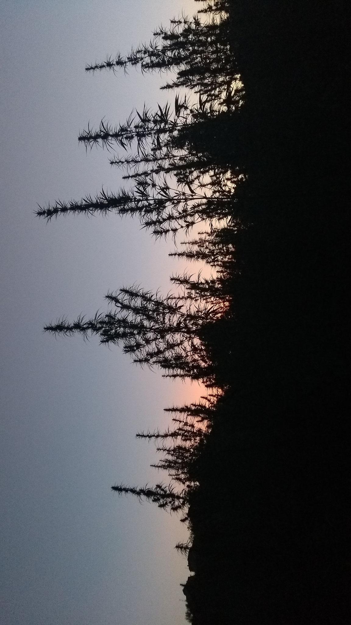 tramonto cannabis