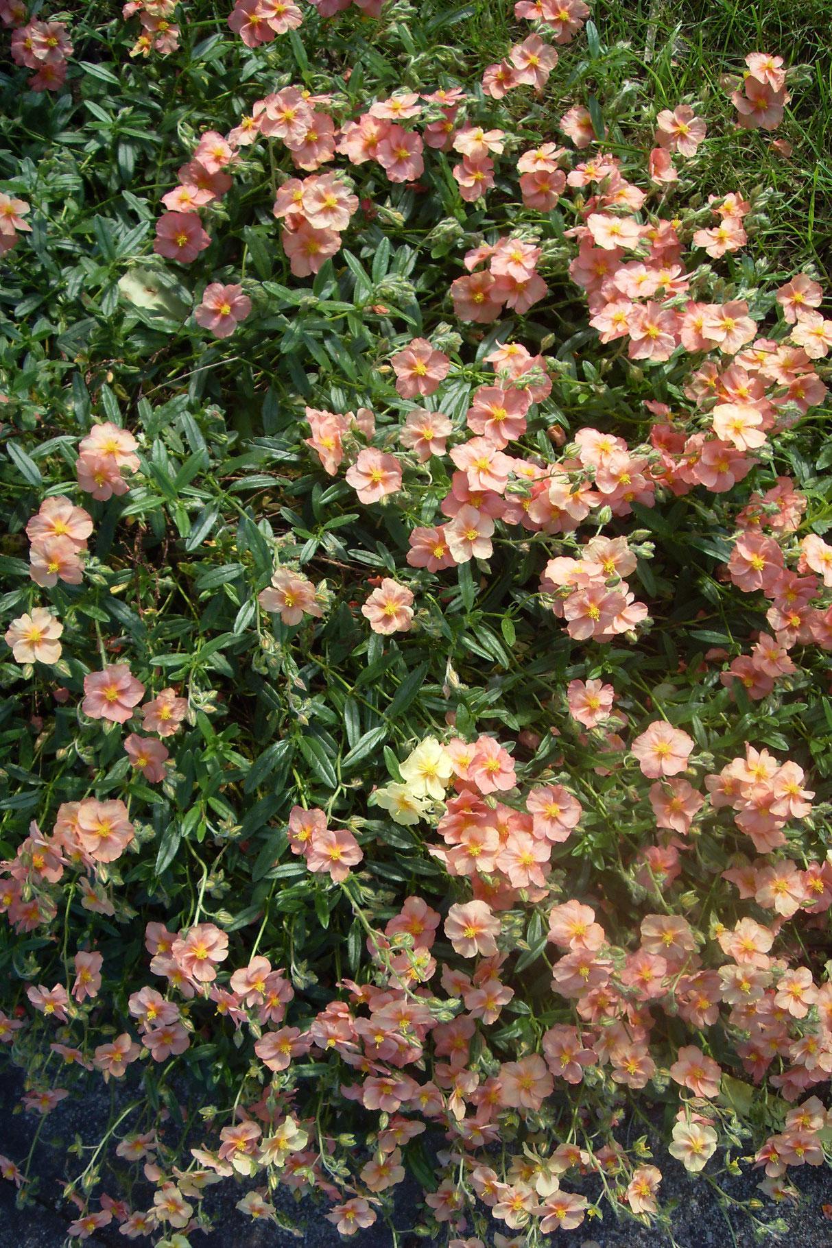 Blüten 2014-13