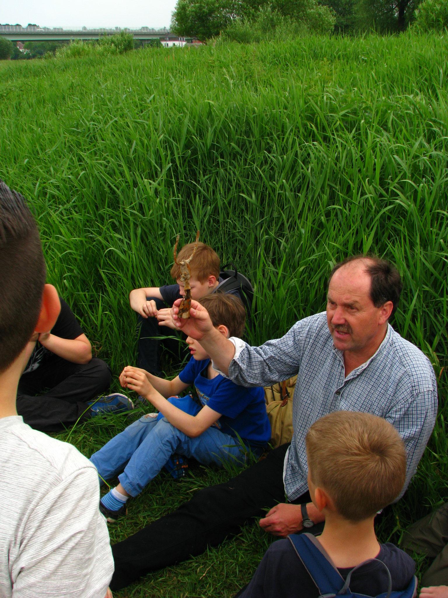 Herr Hermann zeigt uns Dinge, die es in der Elbe gibt