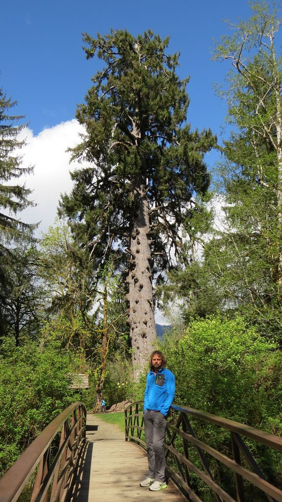 Worlds largest Cedar Tree