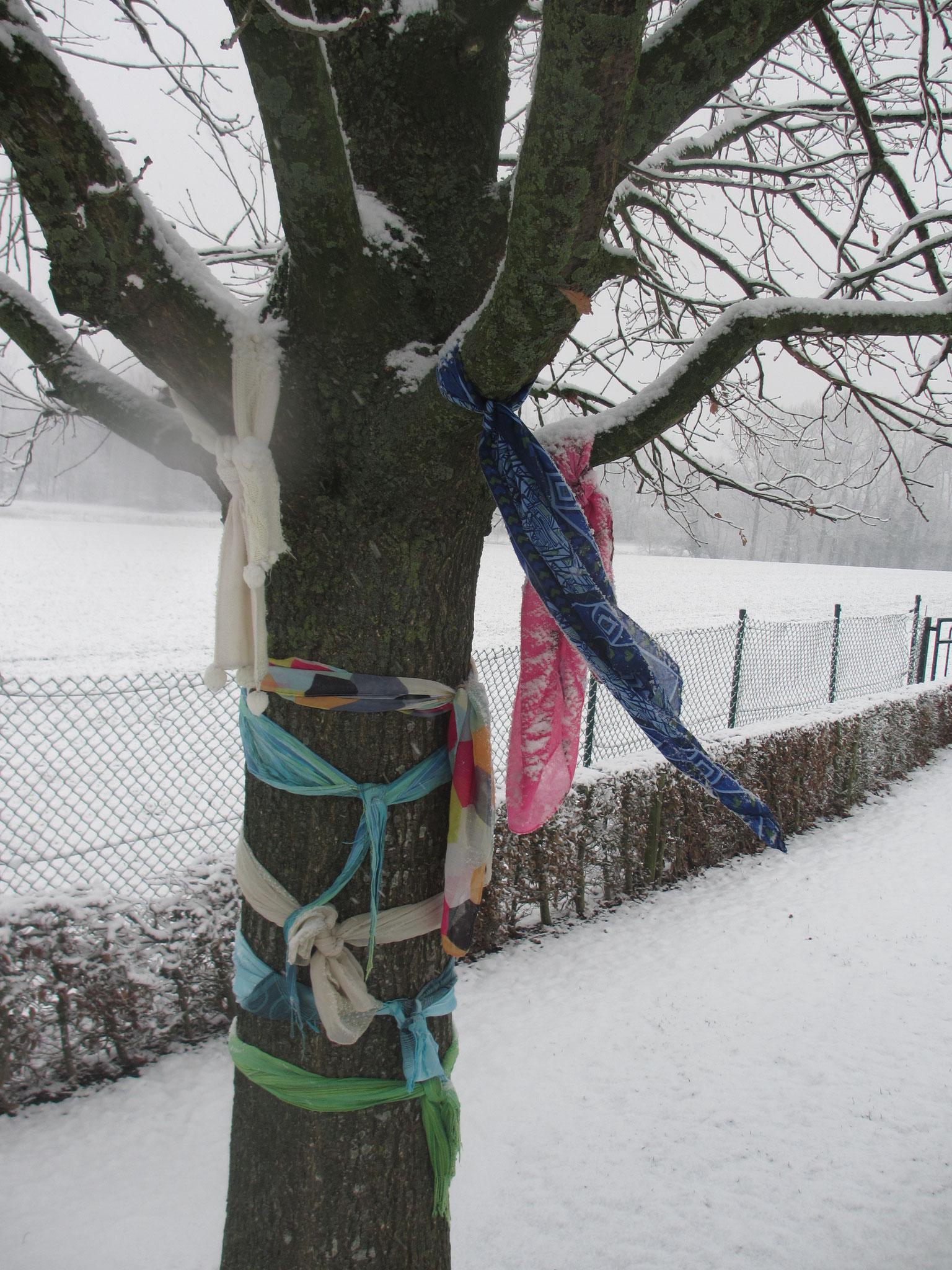 Les écharpes des petits de Mme Virginie tiennent chaud à notre arbre.