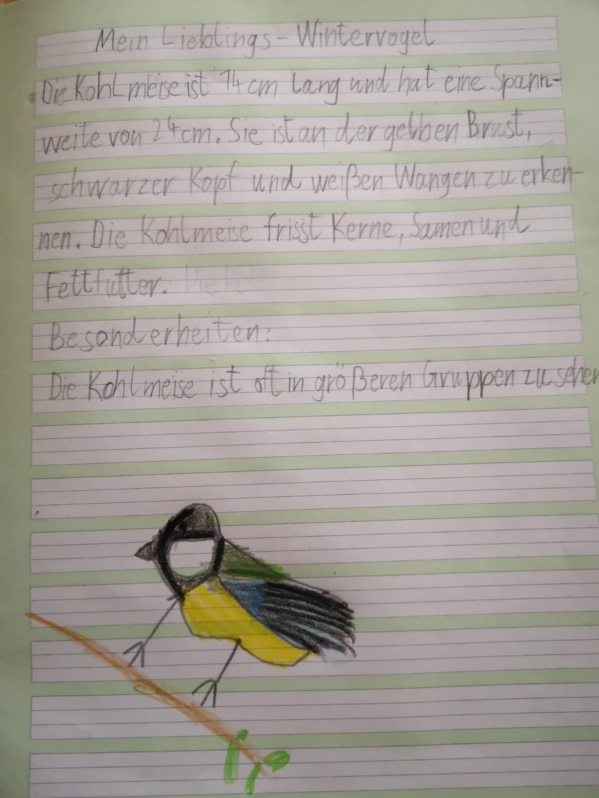 Kohlmeise, Felix 1/2b
