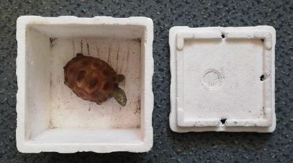 Schildkrötenfigur