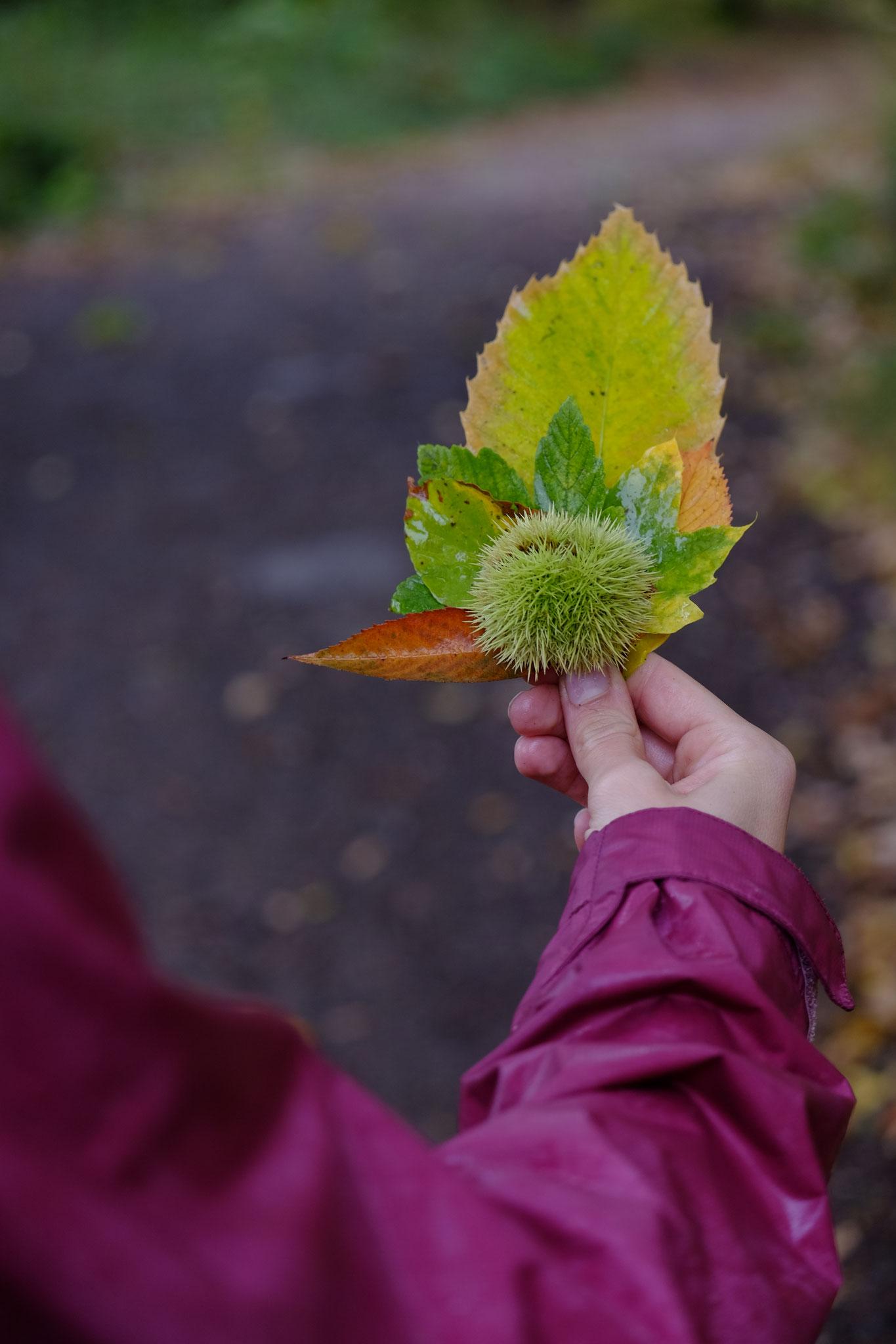 Herbstliche Sammlung