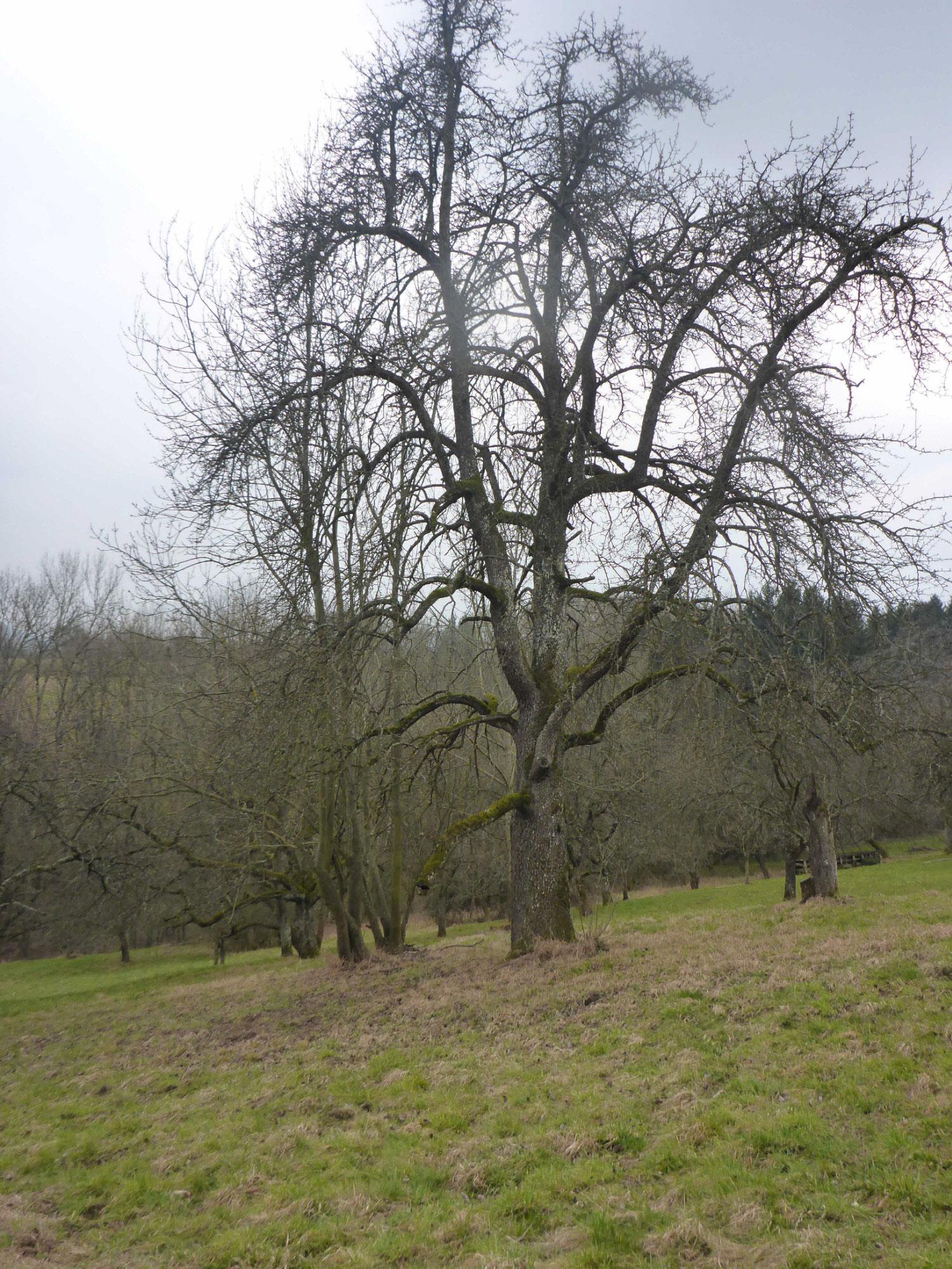 Birnbaum Foto B.E.
