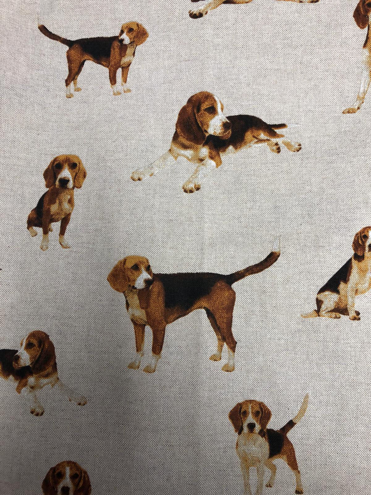 """Eddie the Beagle"""