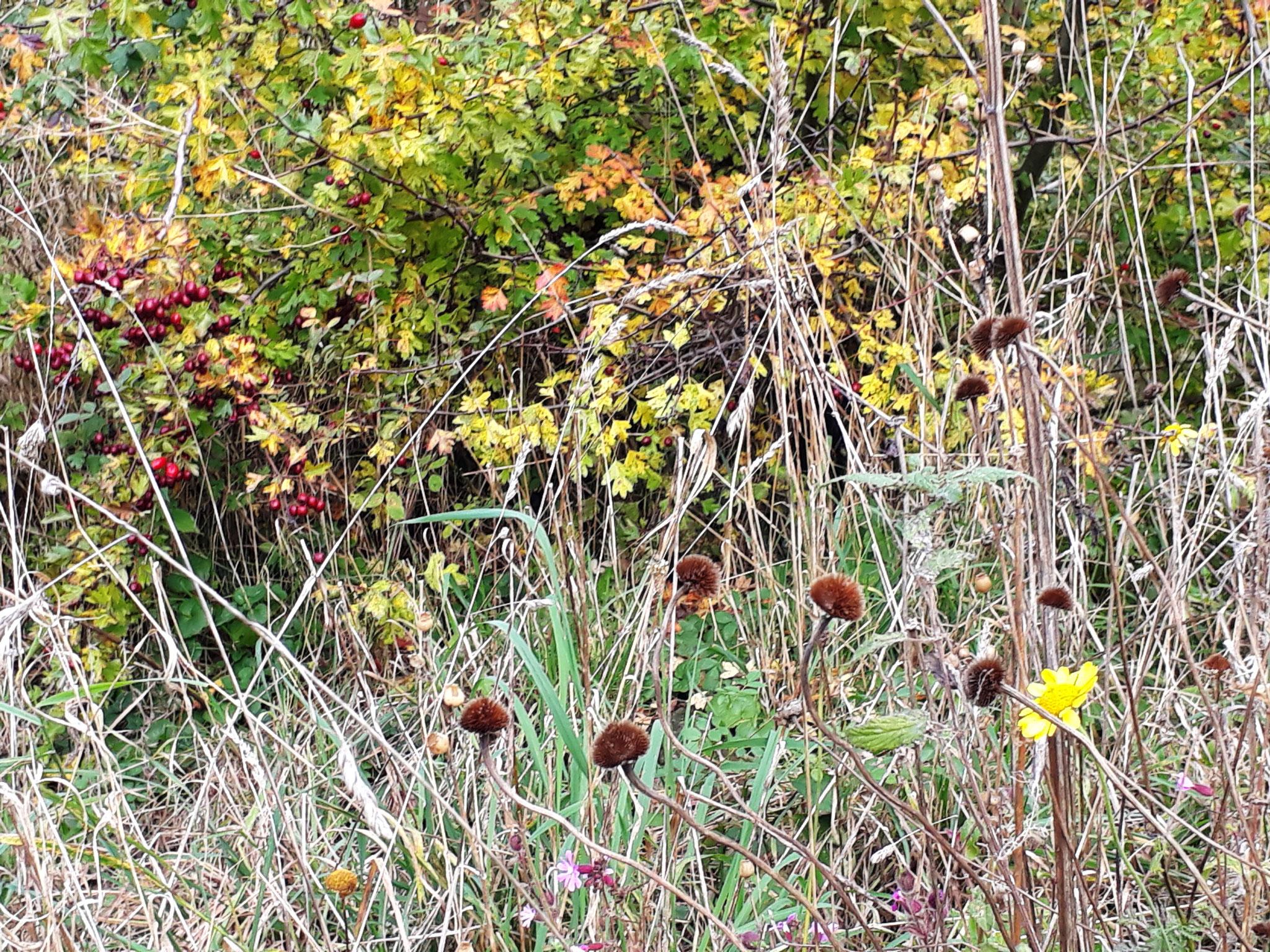 Herbst auf der Aue-Wiese 2020 (Foto: J. Auras)