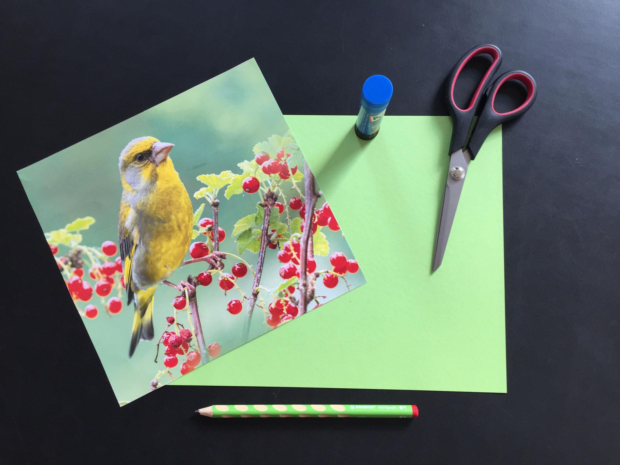 Du brauchst: Ein schönes Bild. Zum Beispiel von einem alten Kalender. Karton. Eine Schere. Einen Leimstift. Einen Bleistift.