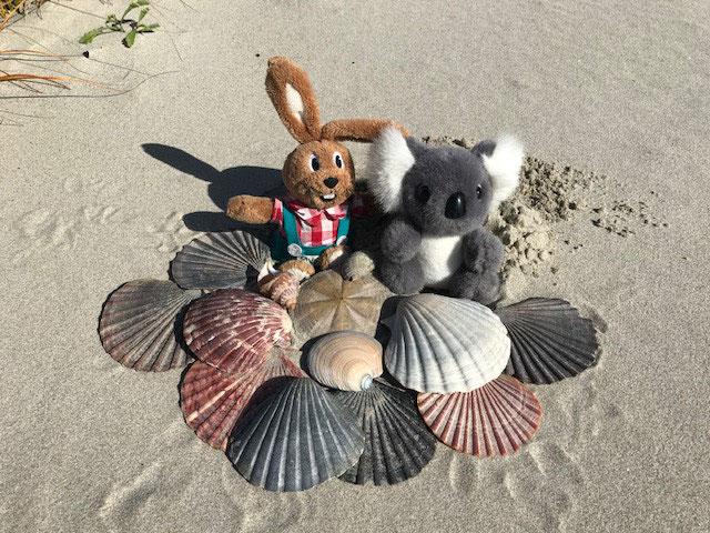 Wir sind reich - Am Waipu Cove Beach