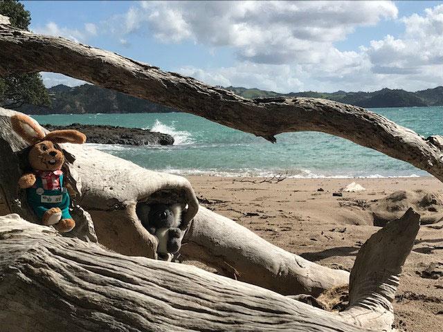 Walbeobachtung am Whale Bay Beach