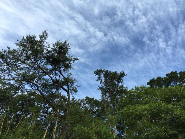 緑と朝の空気と鳥の囀り、そして蒼が綺麗です。