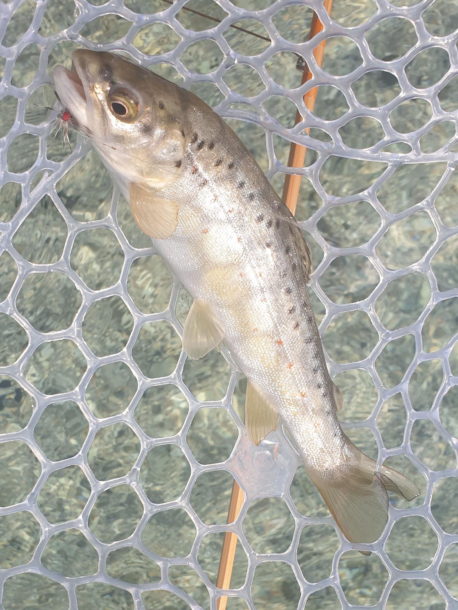 unsere Besatzfische vom September 2019