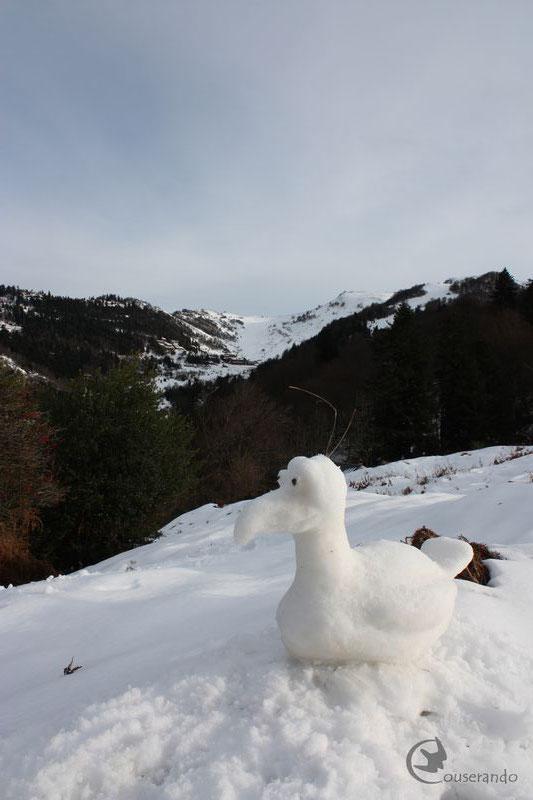 Étrange oiseau - Randonnée Nature en raquettes - Doriane GAUTIER, Couserando - Guzet Ariège Pyrénées