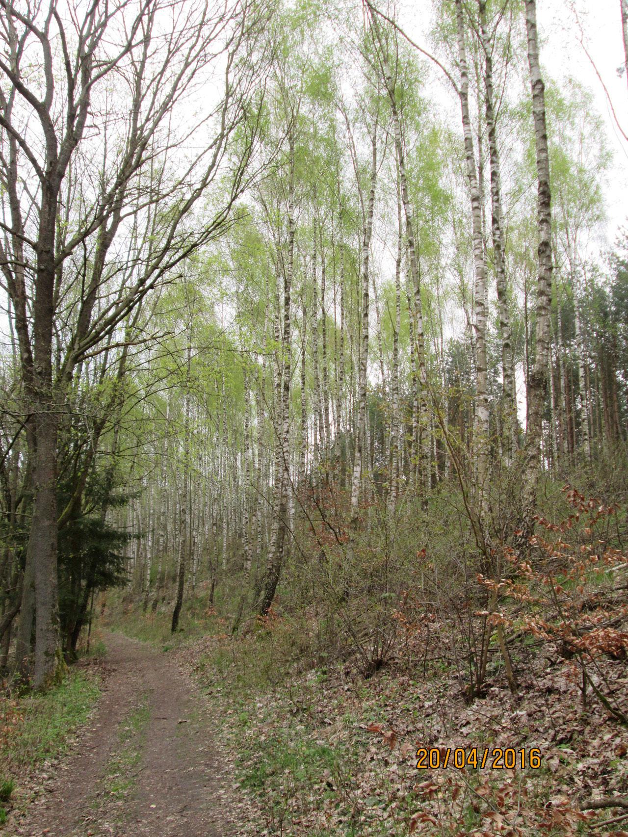 noch grünt der Wald frühjarhsblass über den Urnen, die an den Wurzeln vergraben sind...