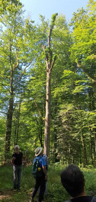 """Un arbre """"Biologique ( réservoir de biodiversité)"""