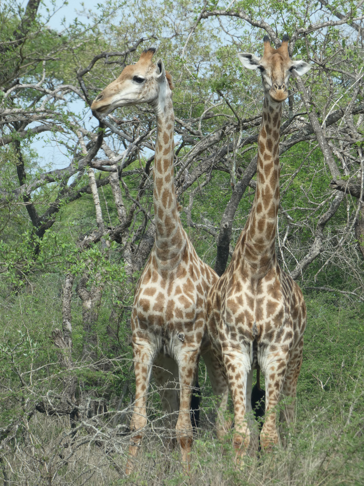 Ndumo Nationalpark