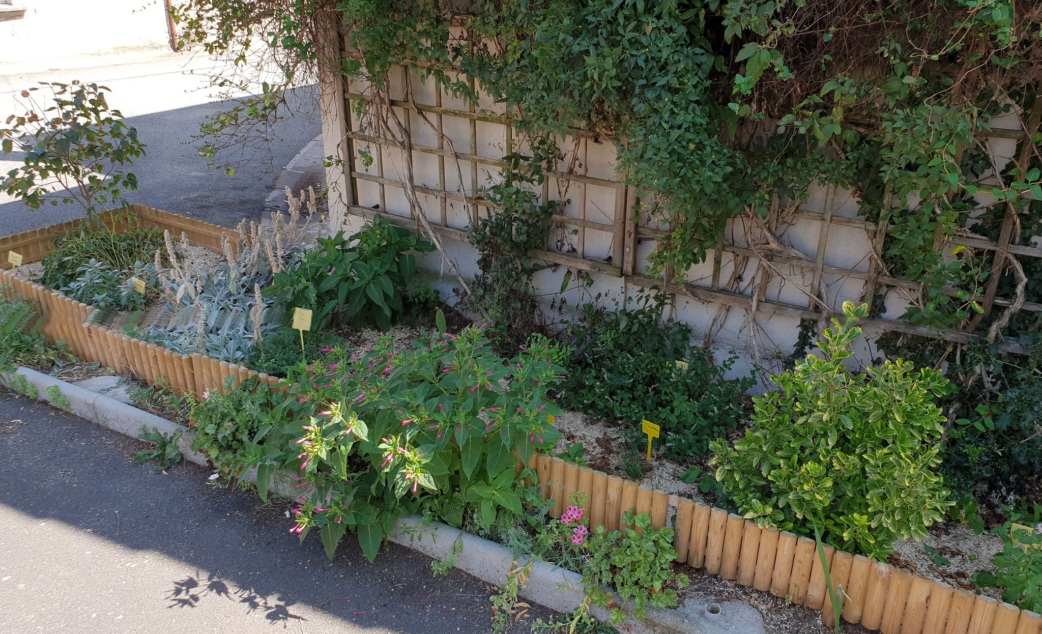 Jardin aromatique partagé