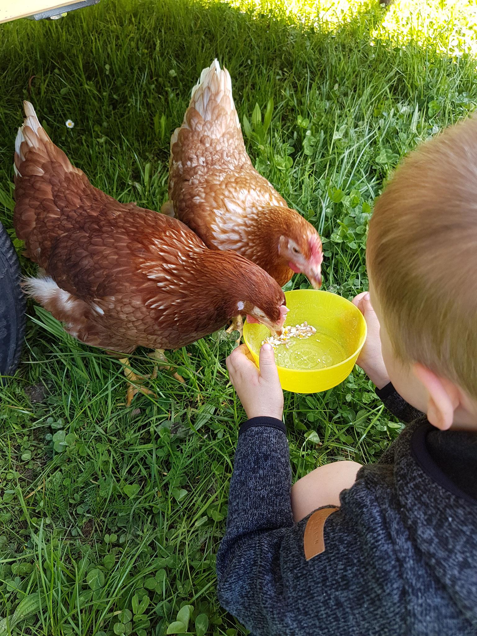 Die Eierproduzentinnen